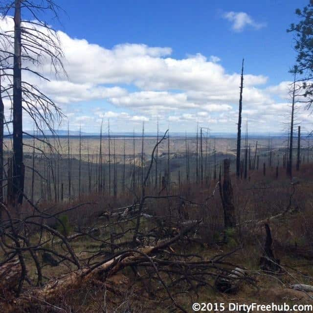 Forest fire burn near Lake Billy Chinook