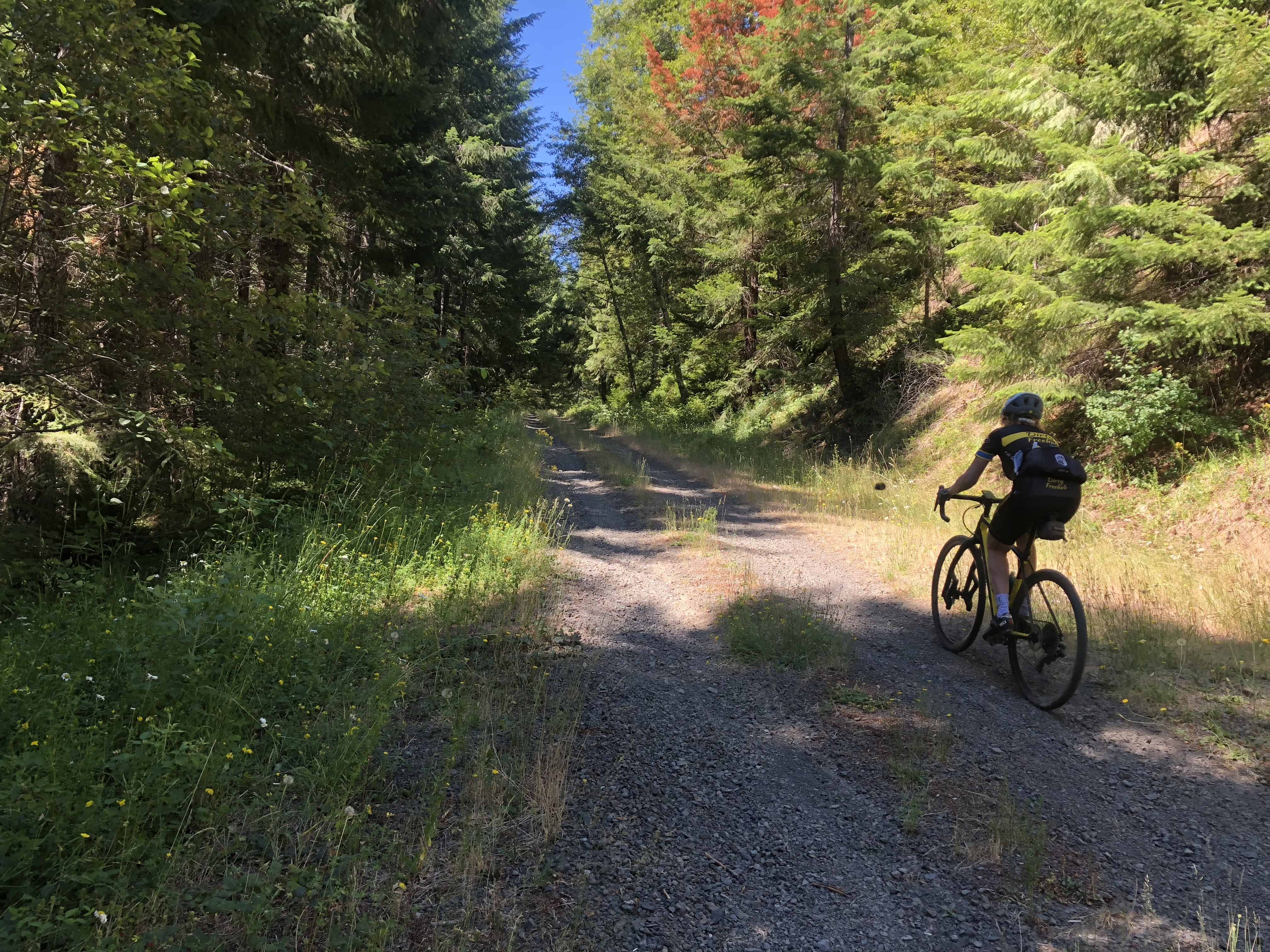 Gravel cyclist climbing Forest Road 1012, Willamette National Forest