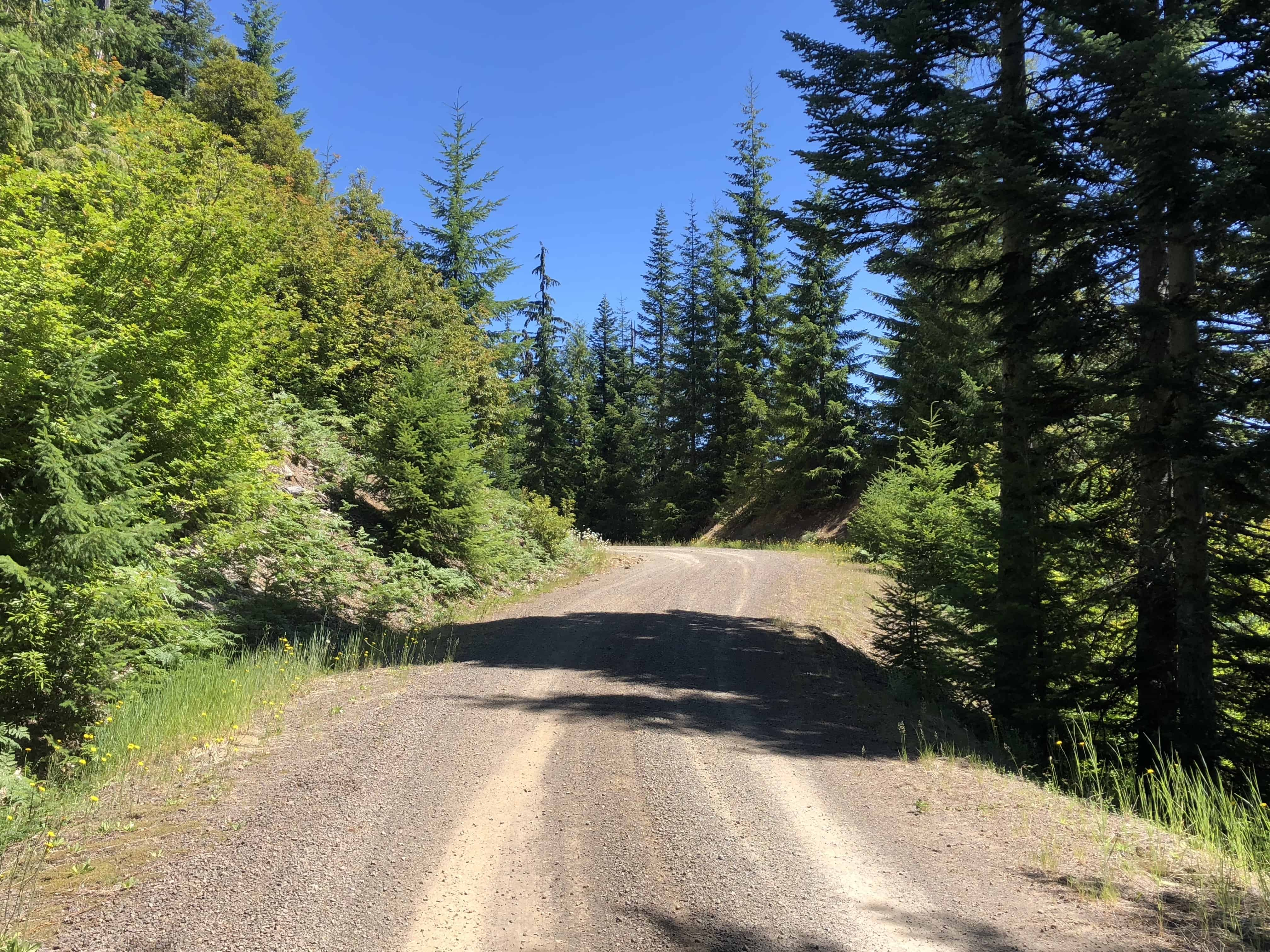 NF 1133 summit, Willamette National Forest