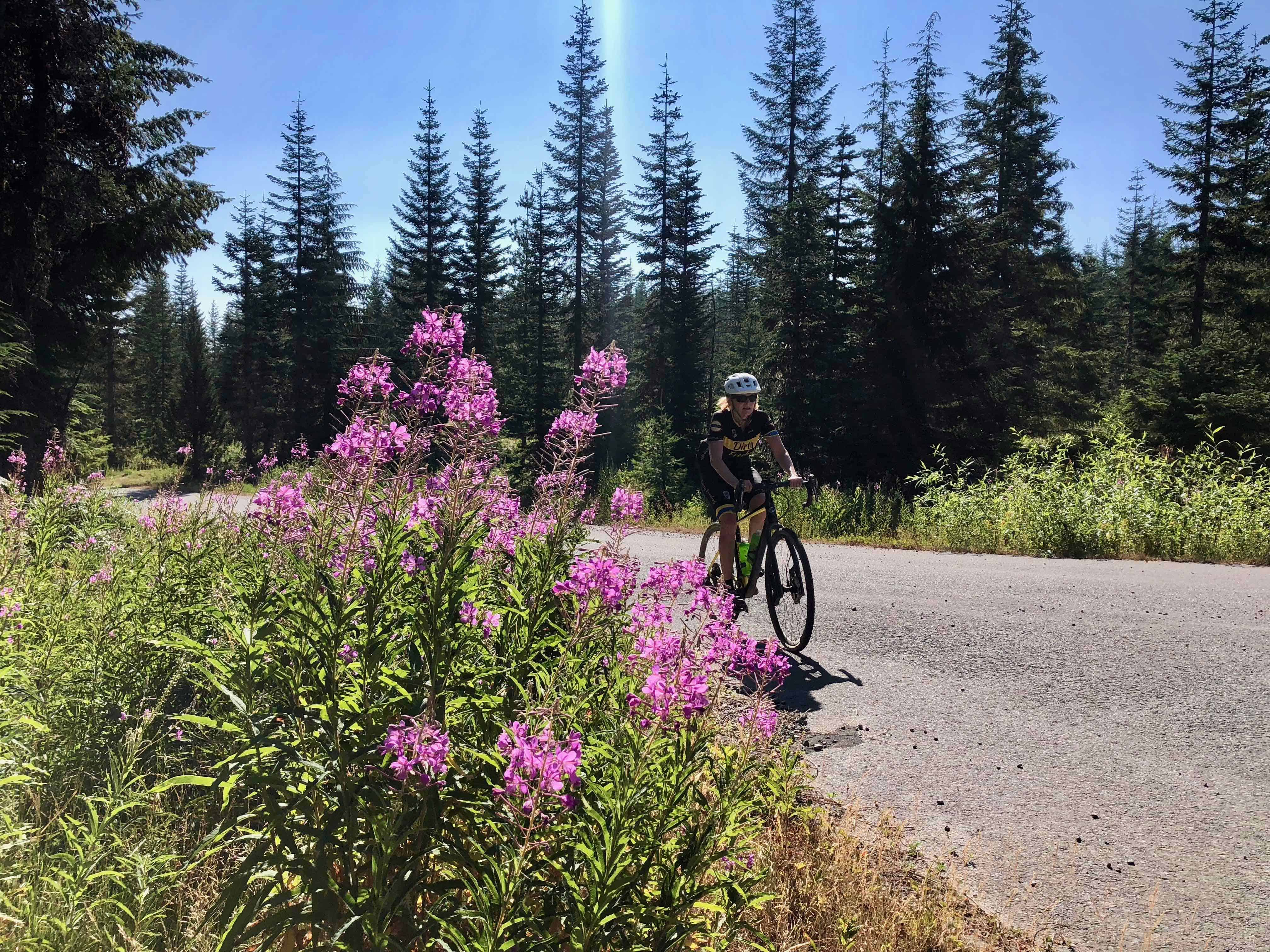 Cyclist on Forest Road 11, Willamette National Forest