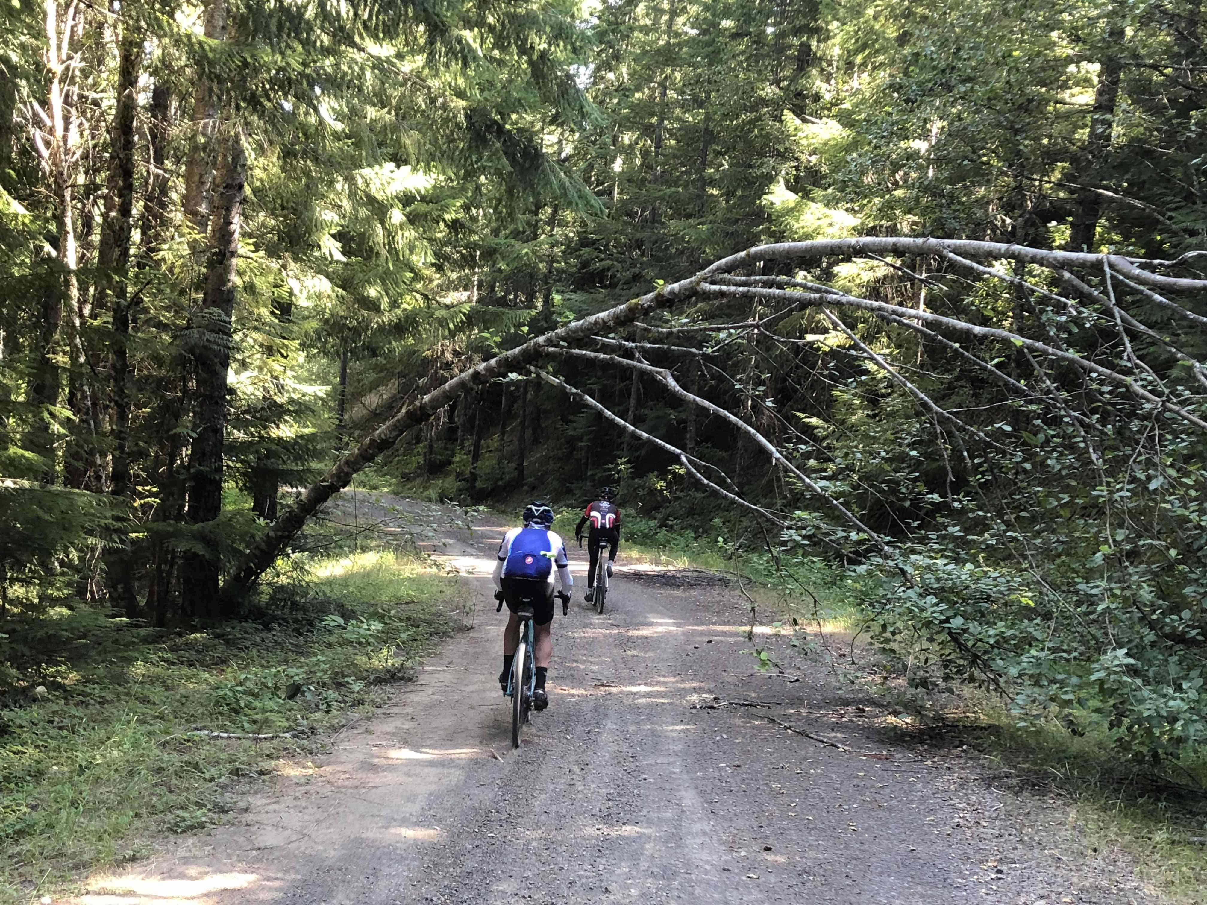 Two riders descending gravel Forest Road 1012, Willamette National Forest