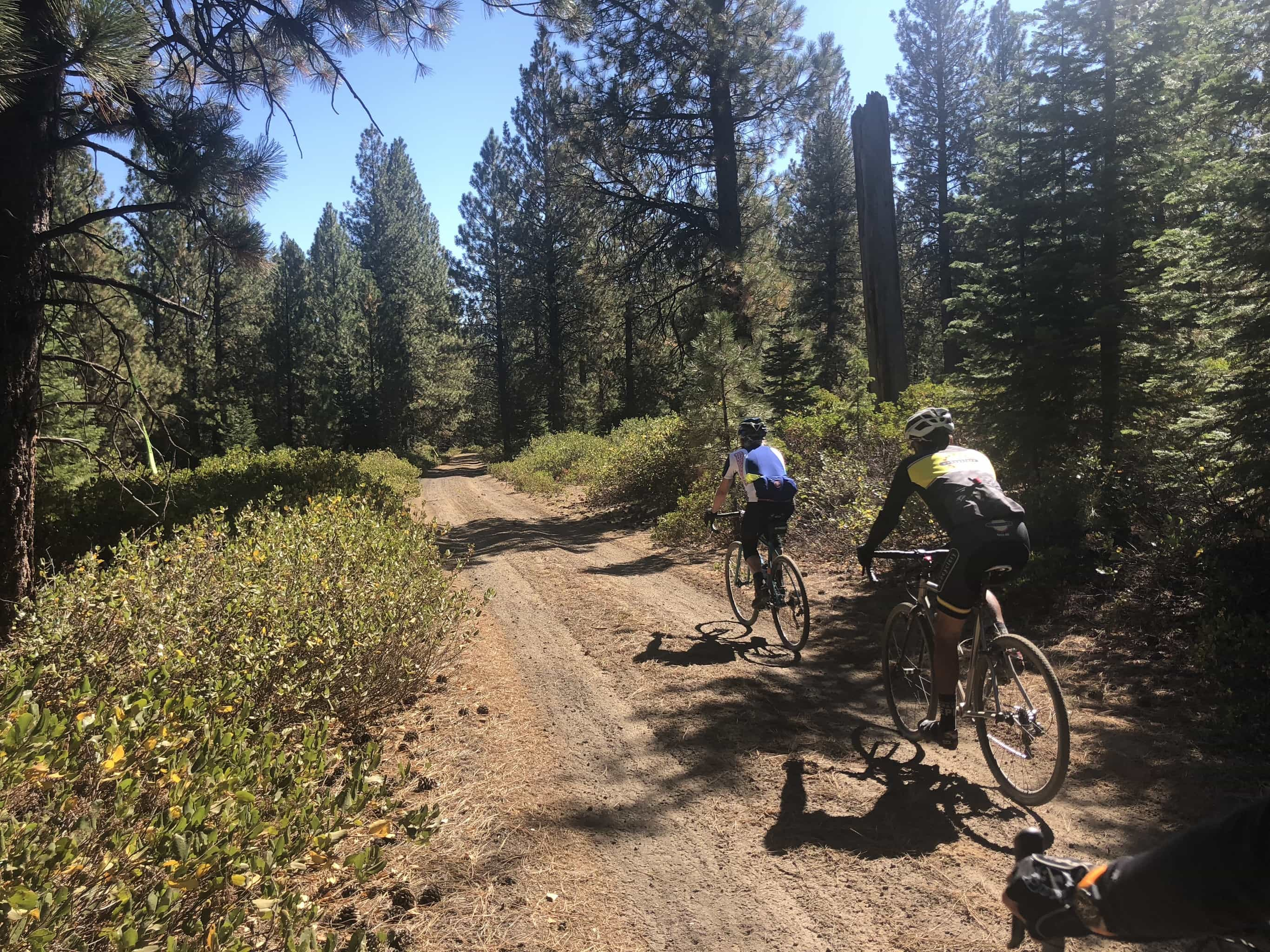 Gravel cyclists on primitive forest service dirt road.