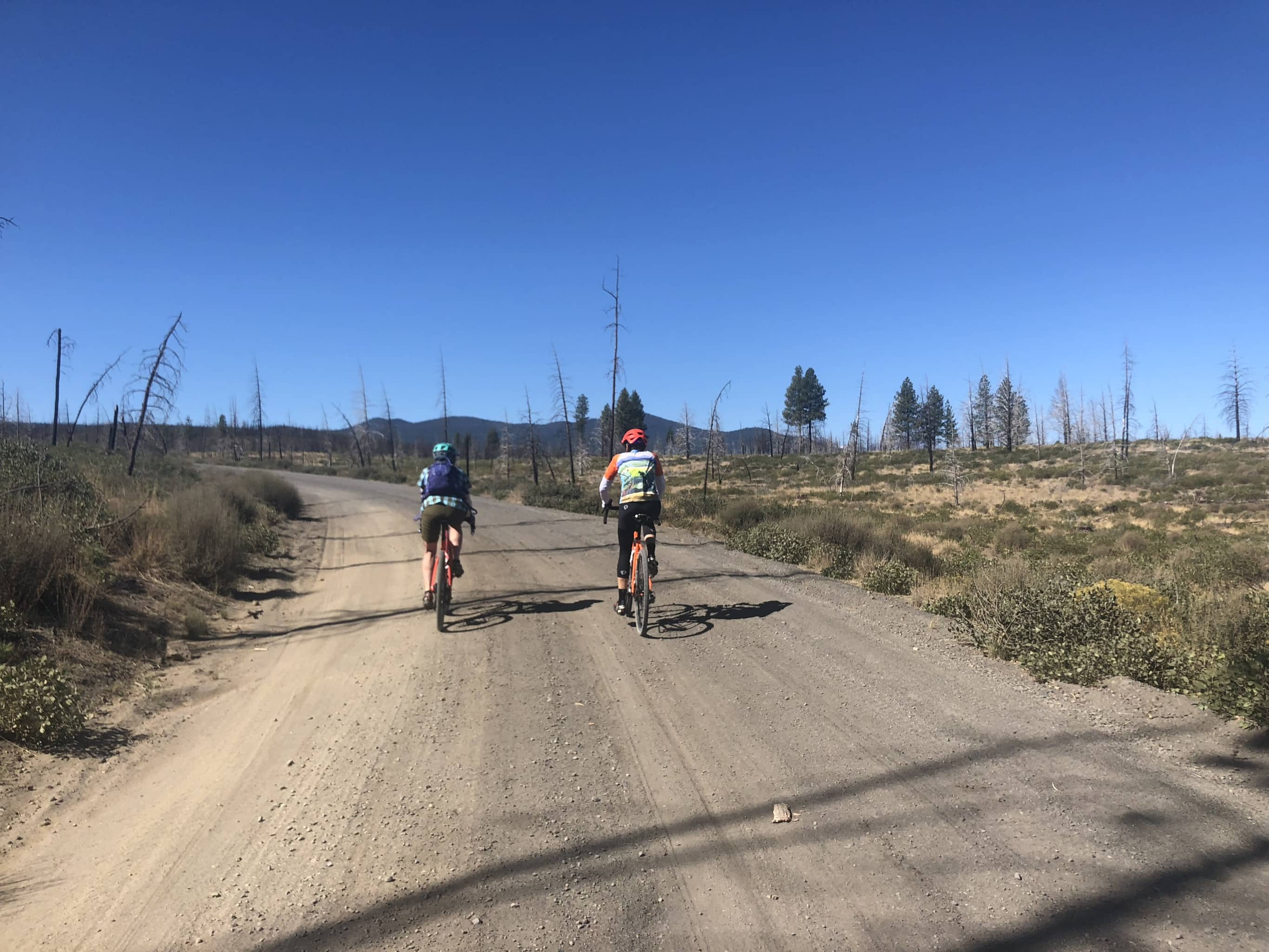 Cyclists descending hard-packed gravel road in Skyline Forest.