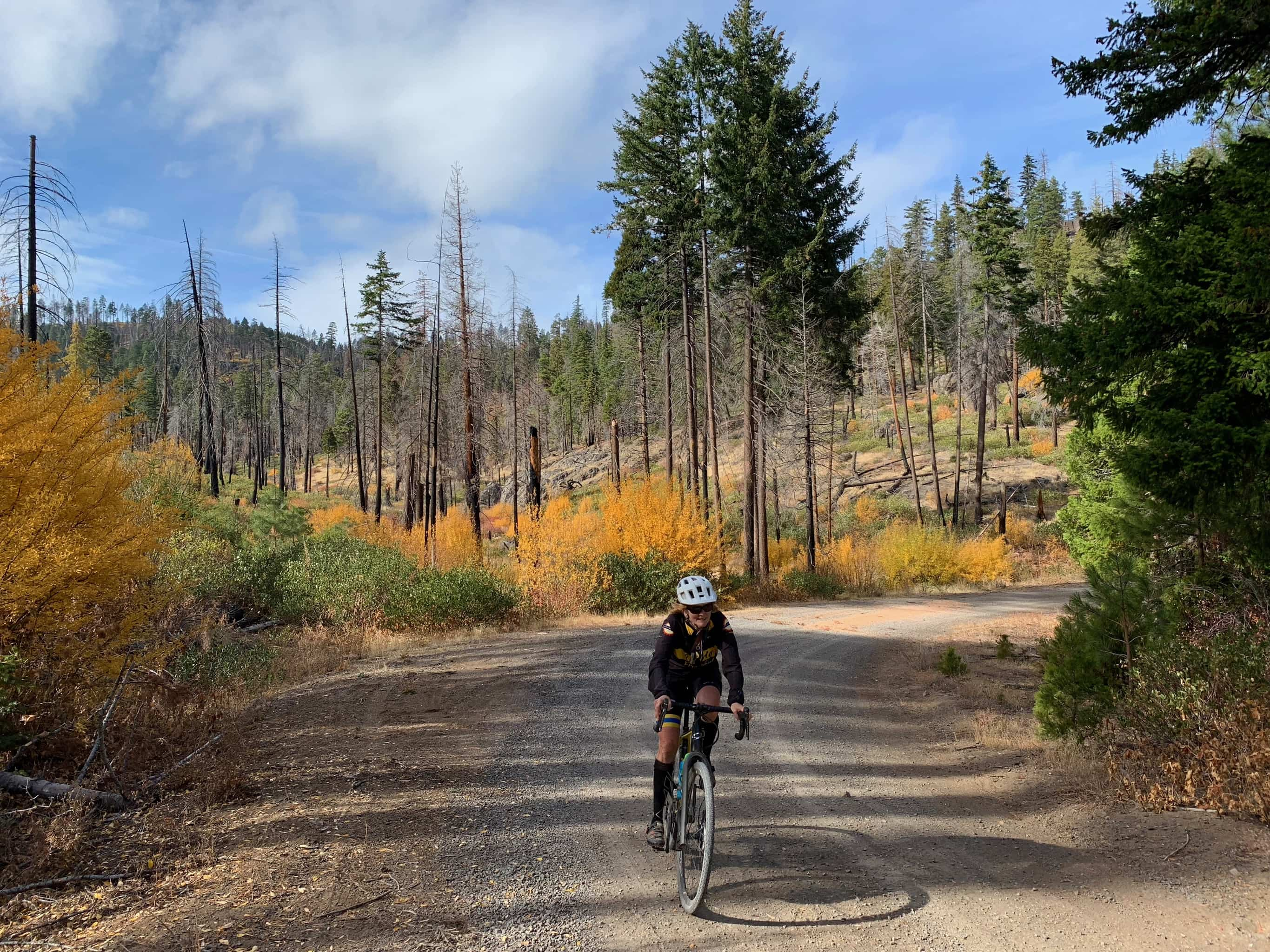 Gravel bike rider on gravel road making sweeping uphill turn with trees changing color in background.