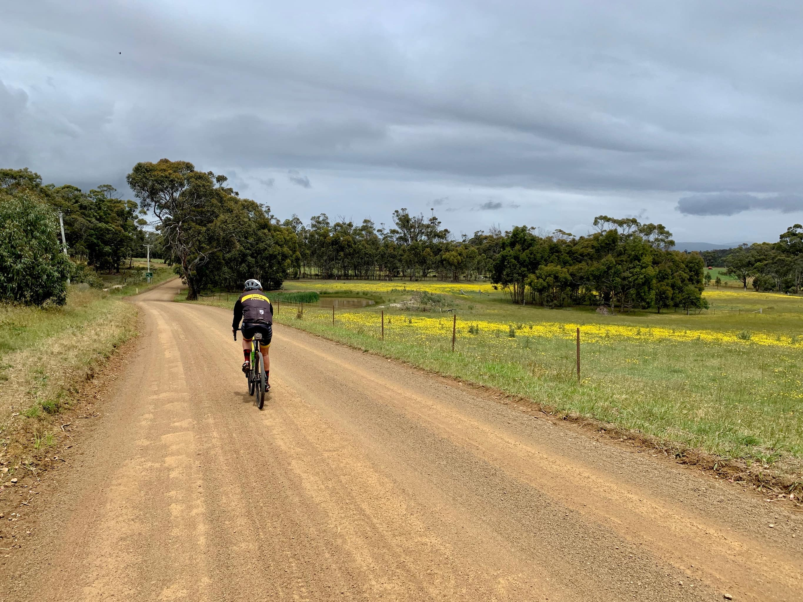 Bike rider on gravel road on North Bruny Island with field of yellow flowers to right.