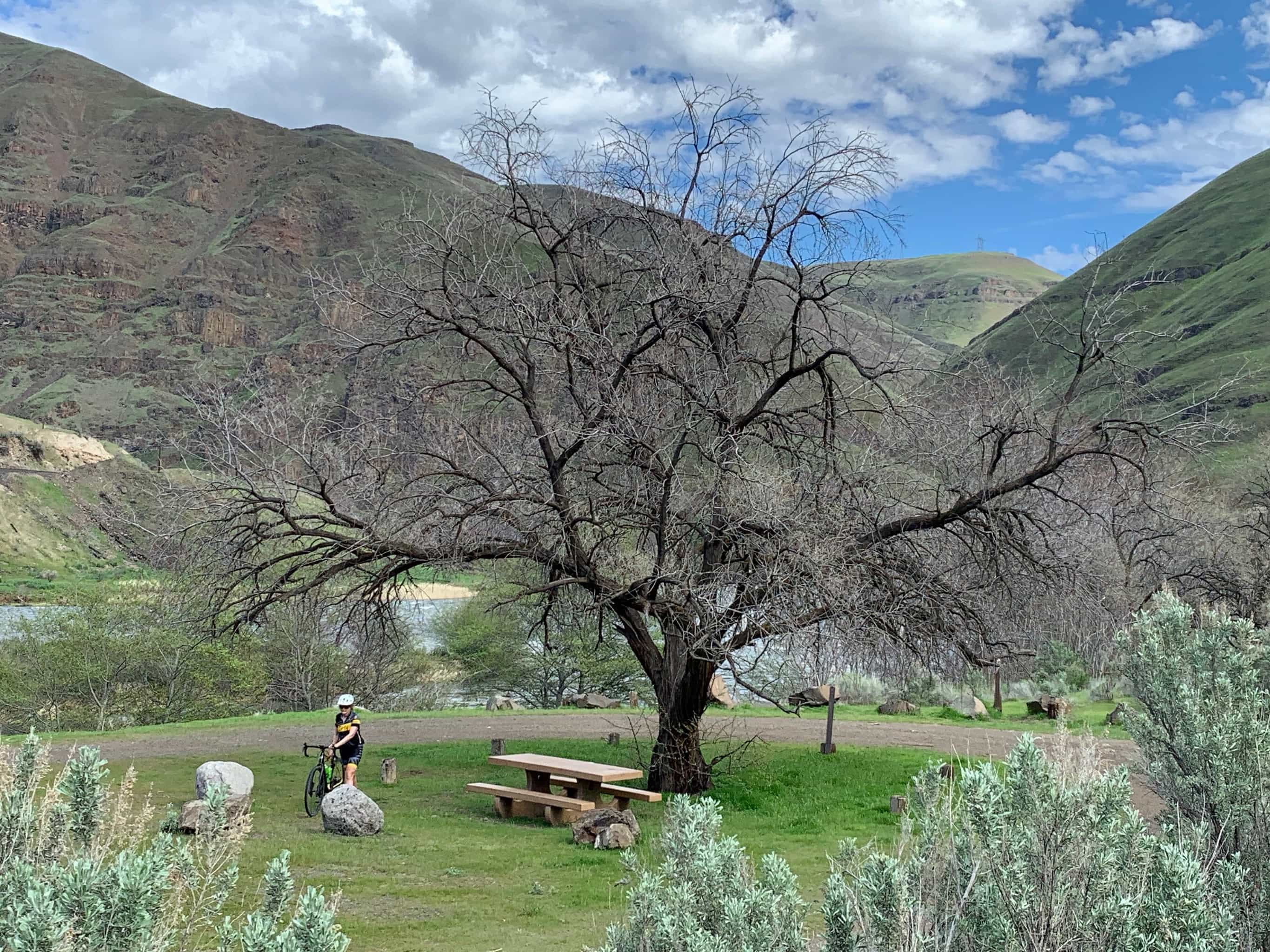 Cyclist under big tree along the banks of the Deschutes River.