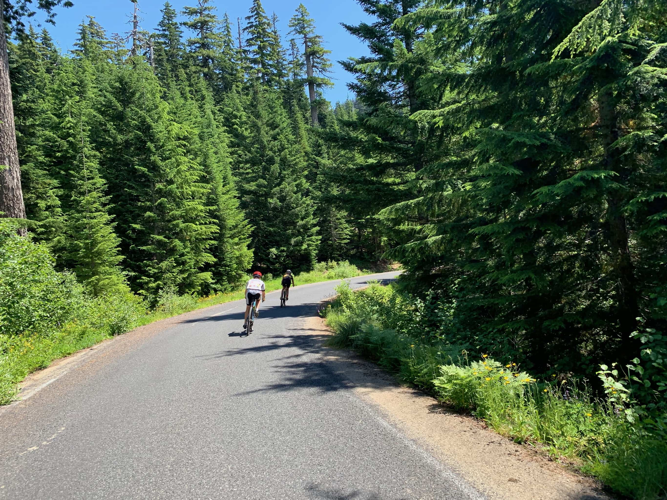 Bike rider descending paved portion of NF-54 in Gifford Pinchot National Forest.