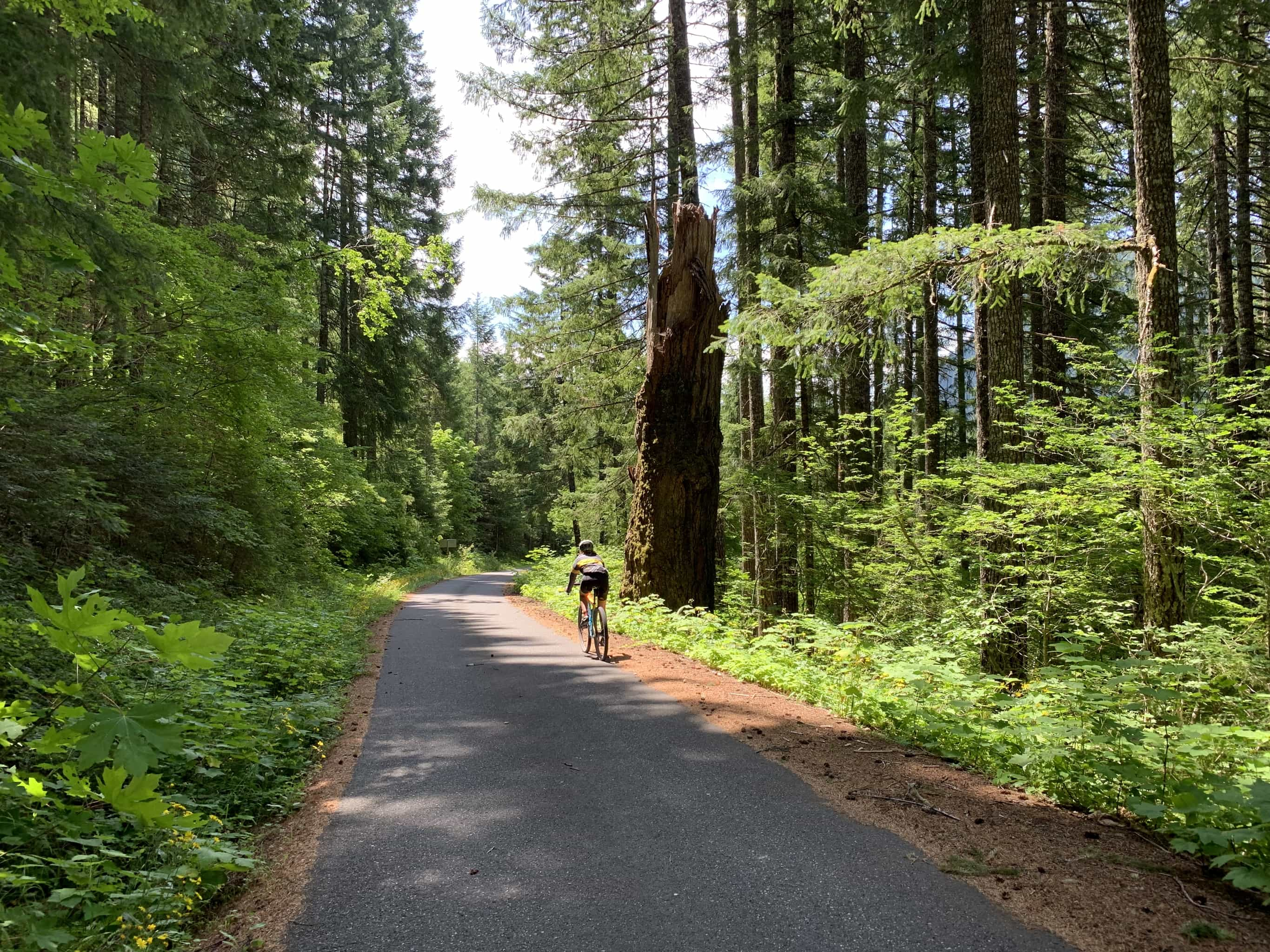 Cyclist riding through old growth forest in Gifford Pinchot National forest near the Columbia River Gorge area.