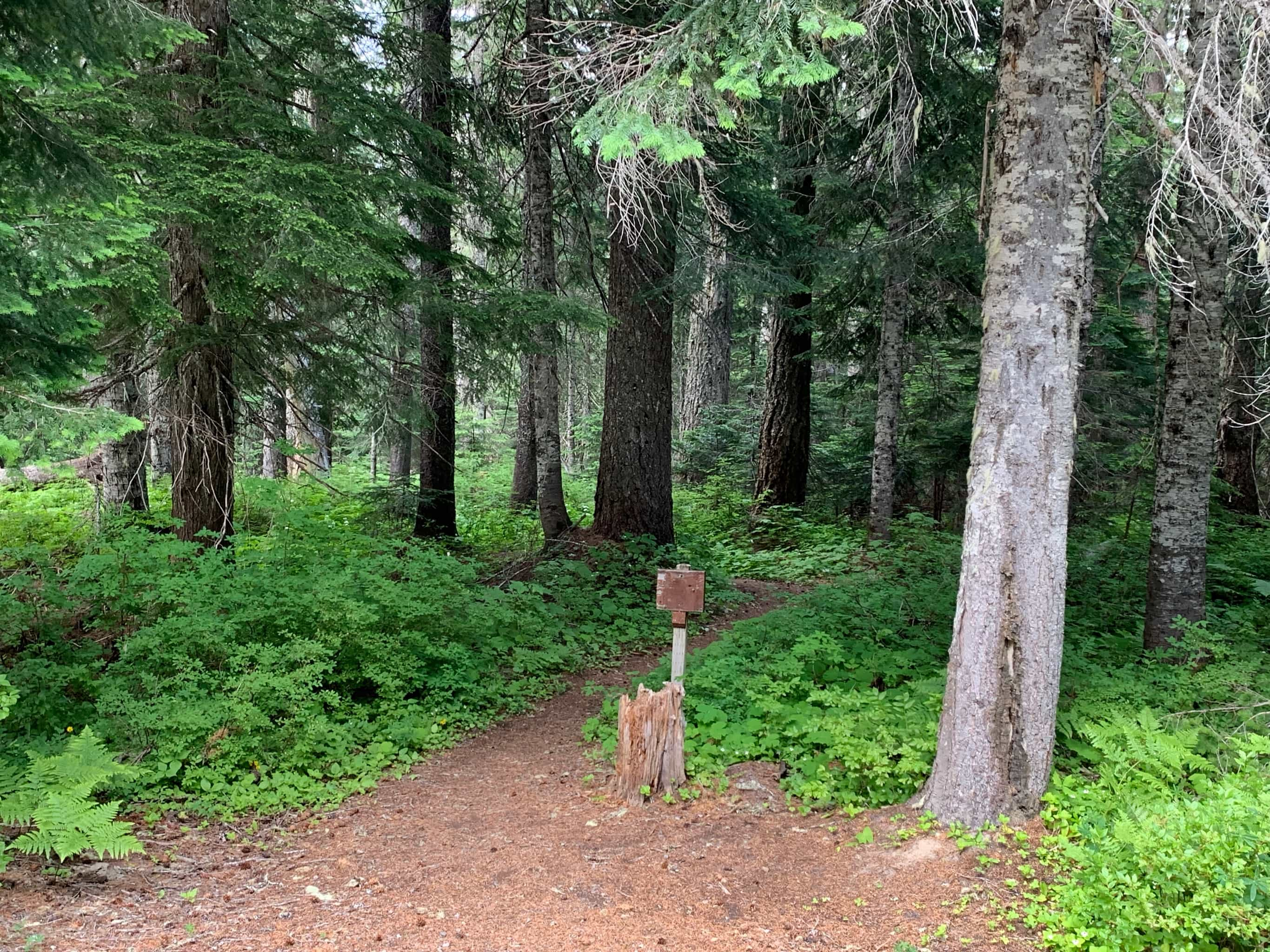 Pacific Crest Trail junction across NF-23 in Gifford Pinchot National Forest.