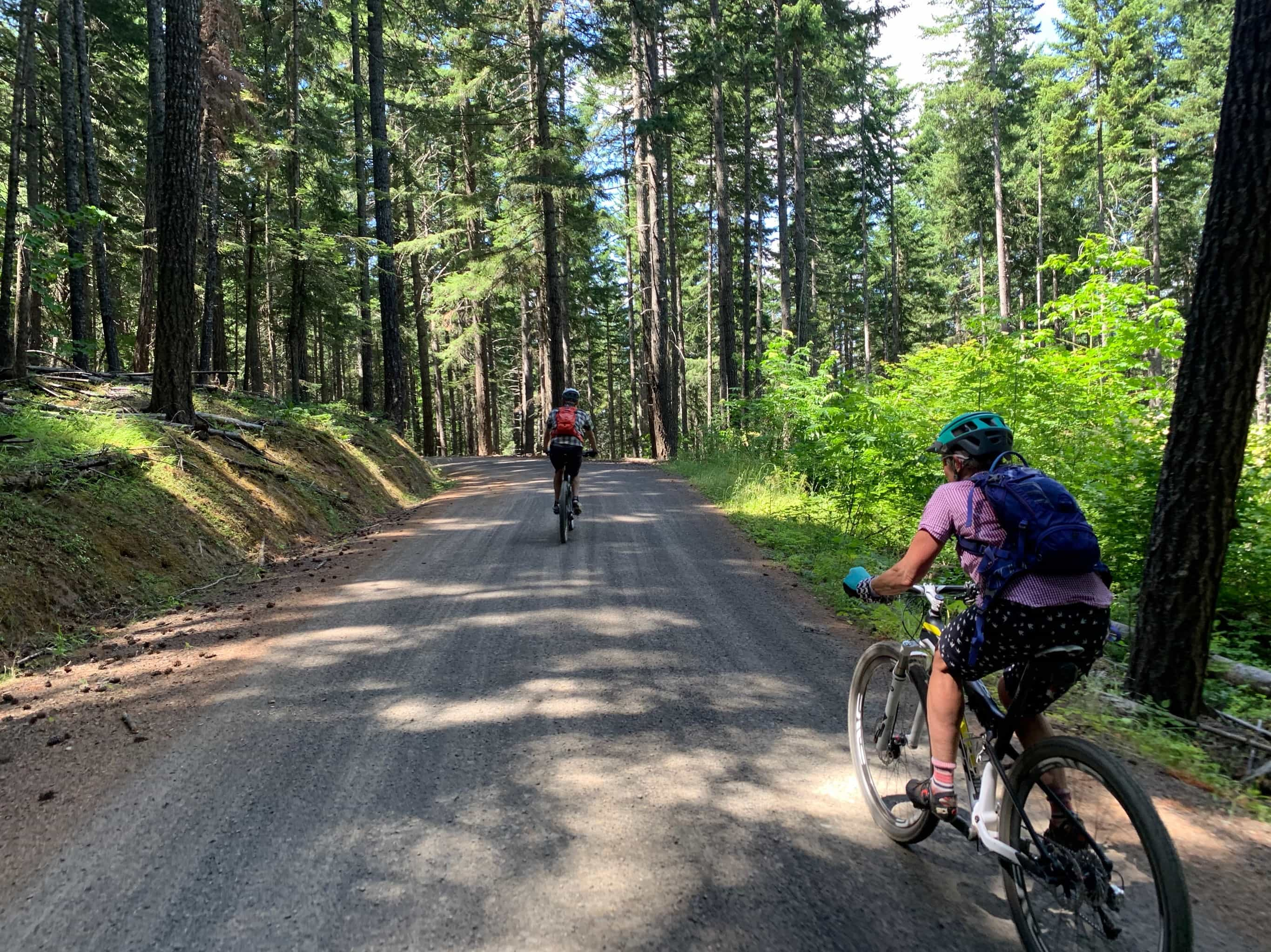 Gravel cyclists on the Lyle Snowden road in an old forest / timber section.