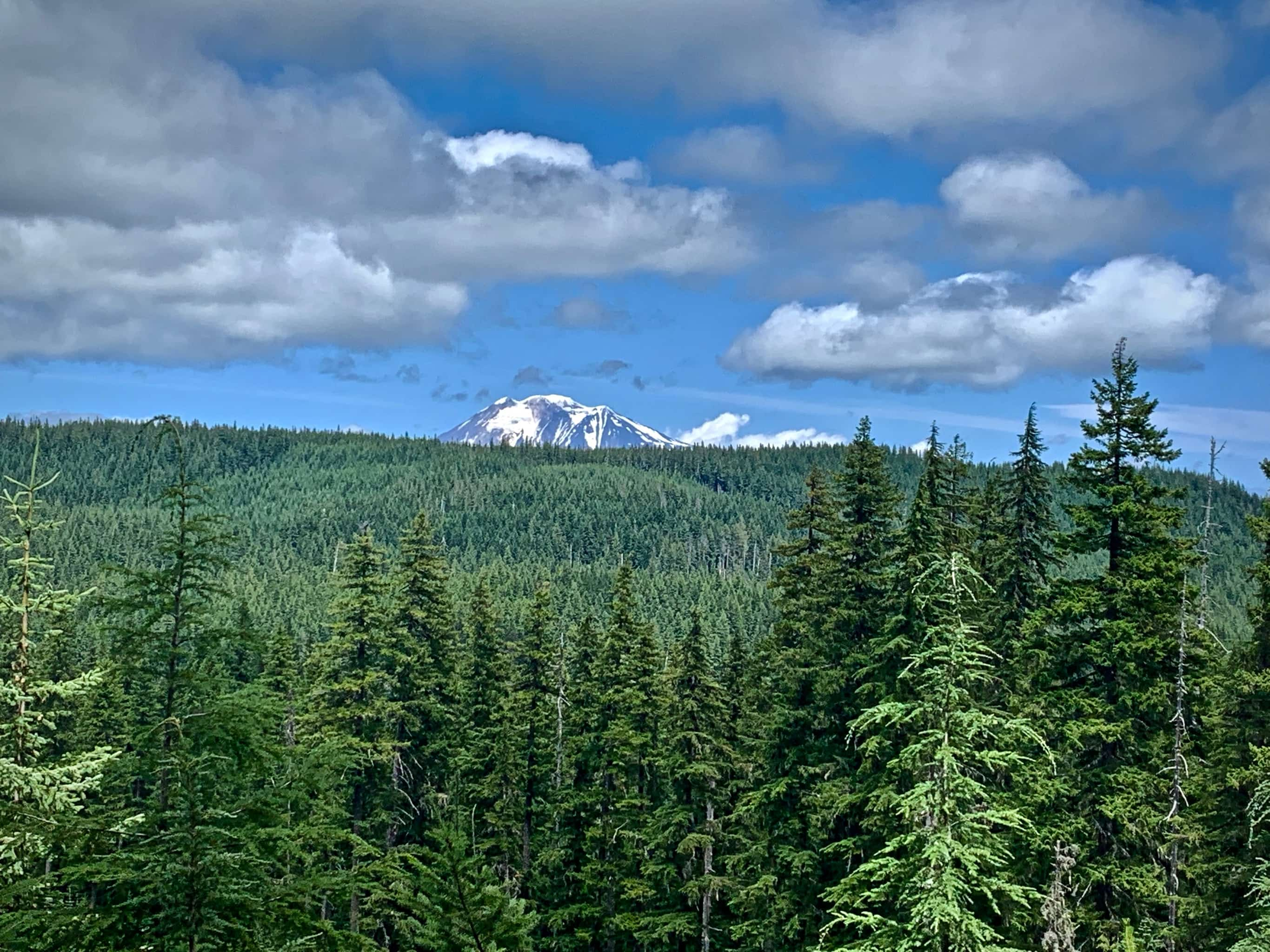 View of Mt. Adams from NF-60 Carson / Guler road in Gifford Pinchot National forest.