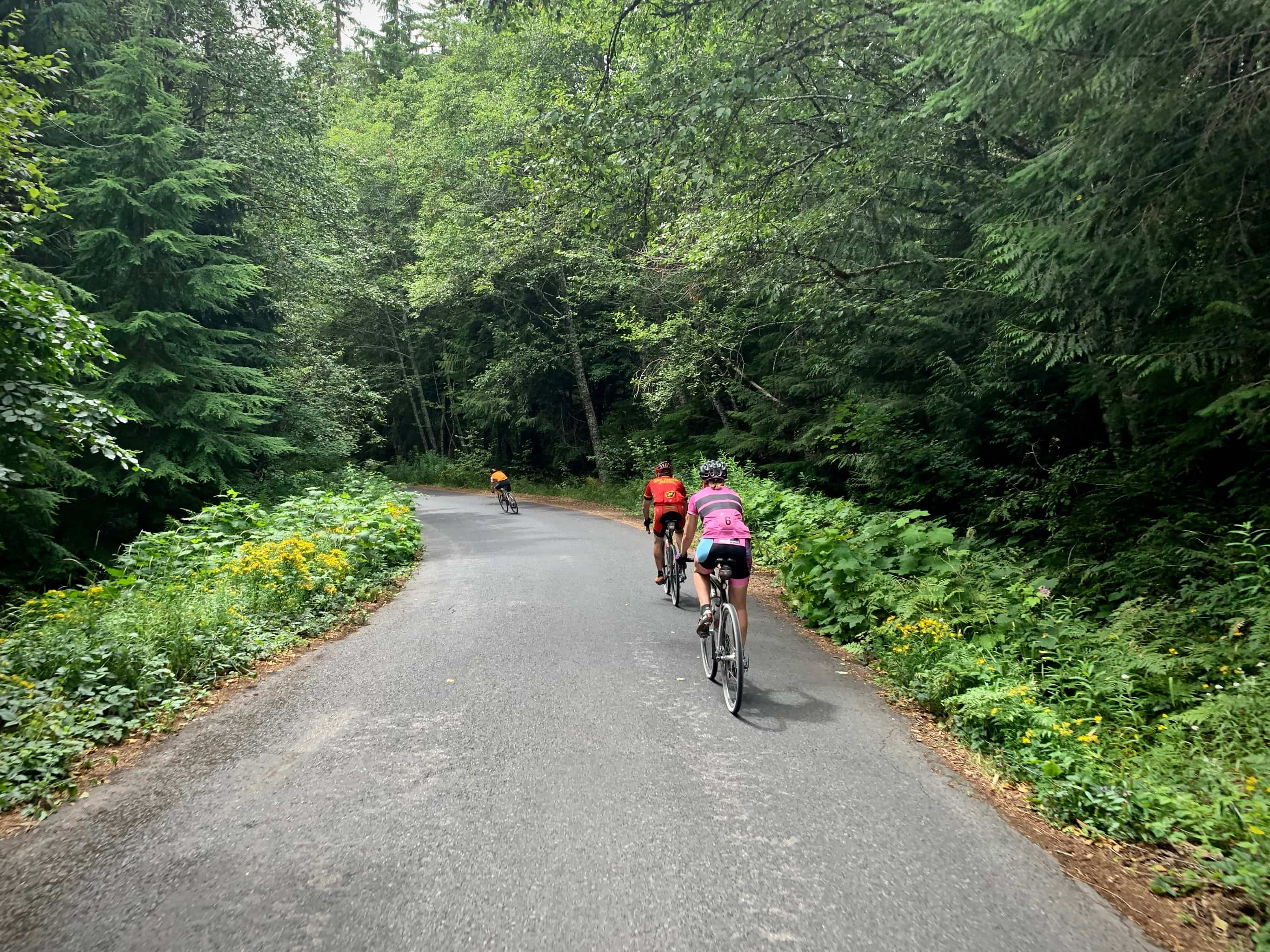Cyclists descending NF-65, paved road near Panther Creek falls in Washington.
