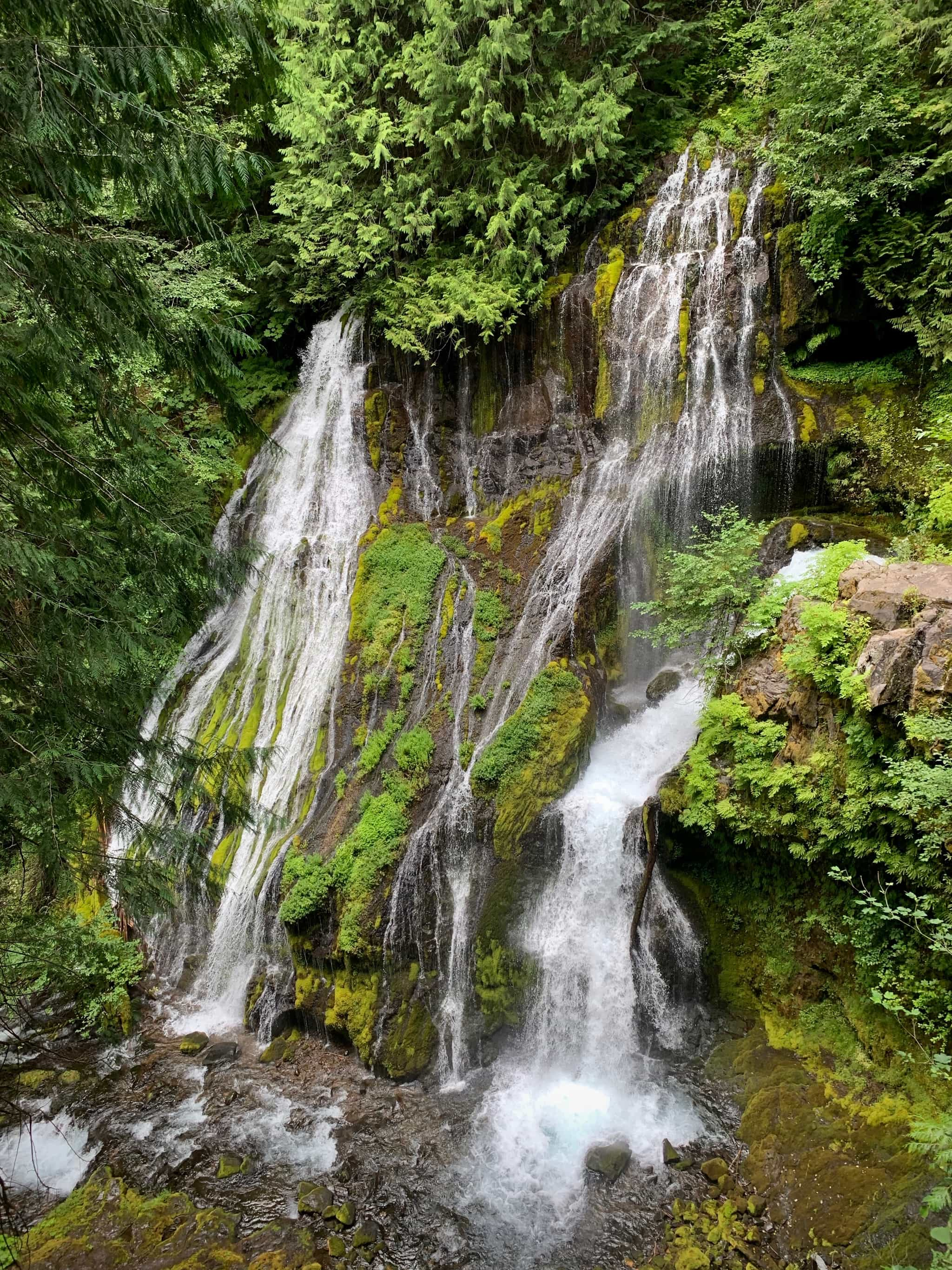 Panther Creek falls in Gifford Pinchot National forest.