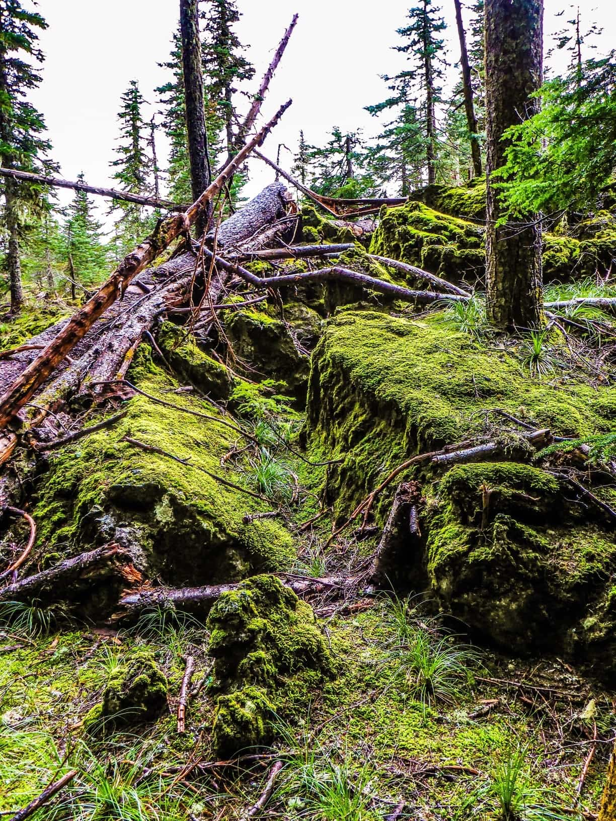 The overgrown lava in the Big Lava Bed near Stabler and Carson, Washington.