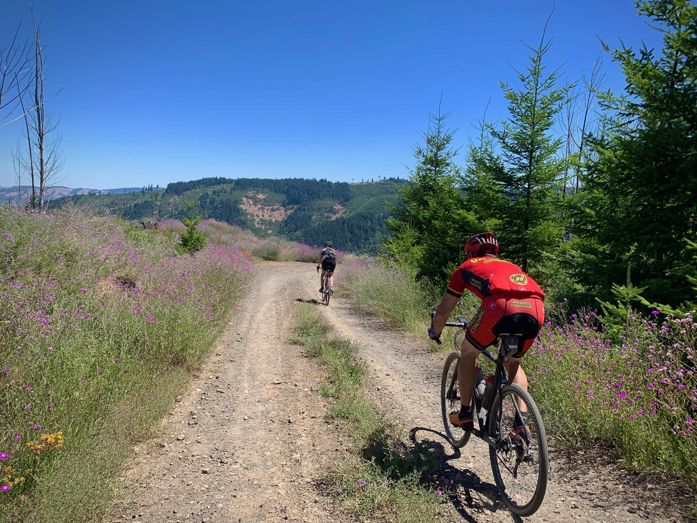 Two cyclists on gravel road with purple flowers near Dee, Oregon.