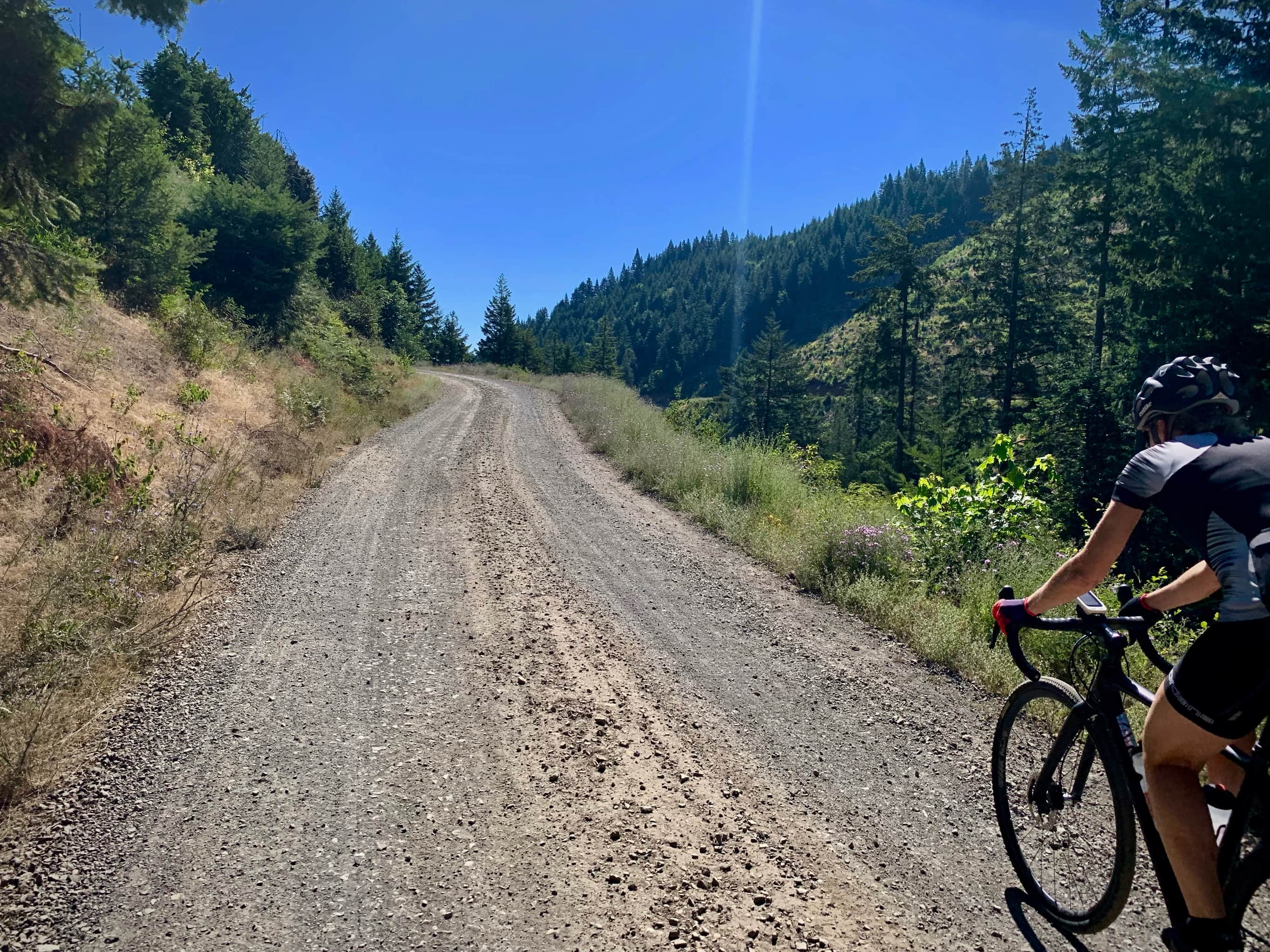 Bike rider on gravel road in Hood River county managed forest.