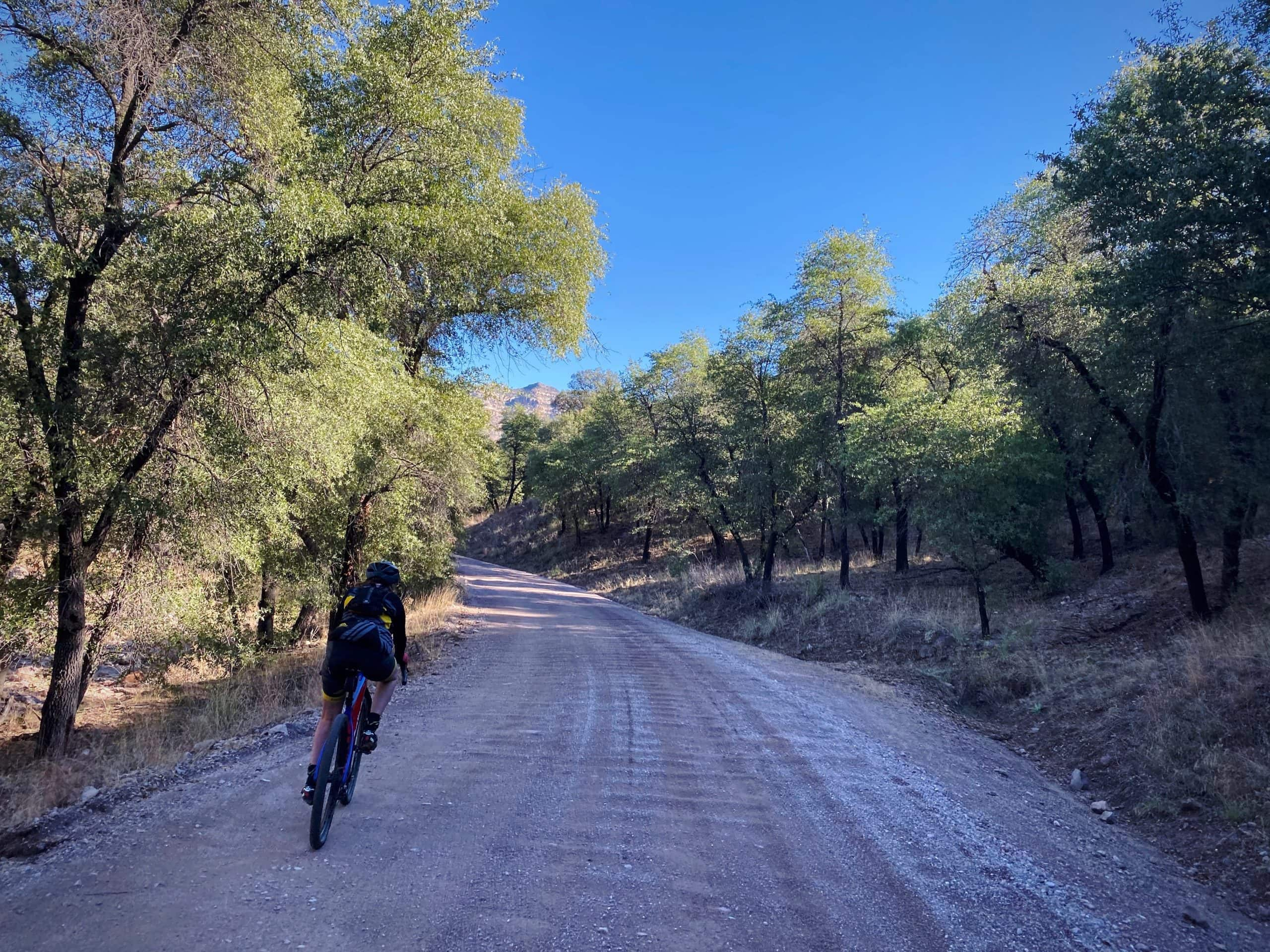 Cyclist on Ruby road, gravel, near Sycamore Canyon entrance with oak and sycamore trees.