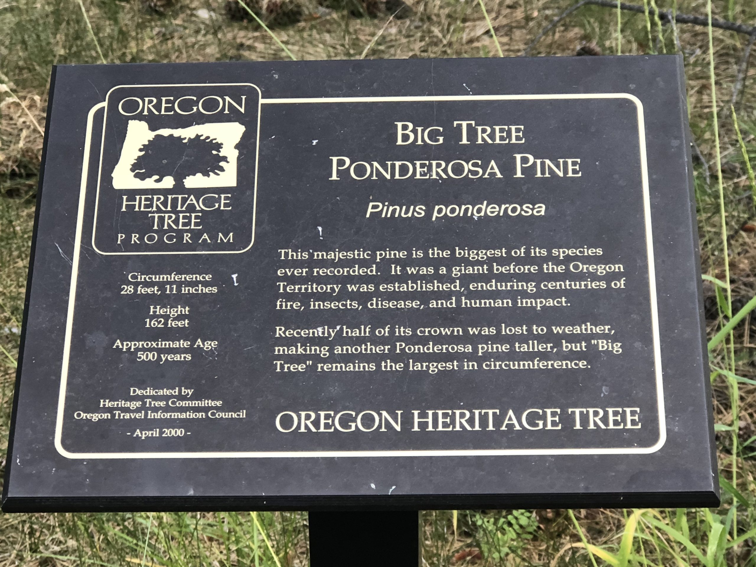 Plaque for the Big Red tree in LaPine State park.