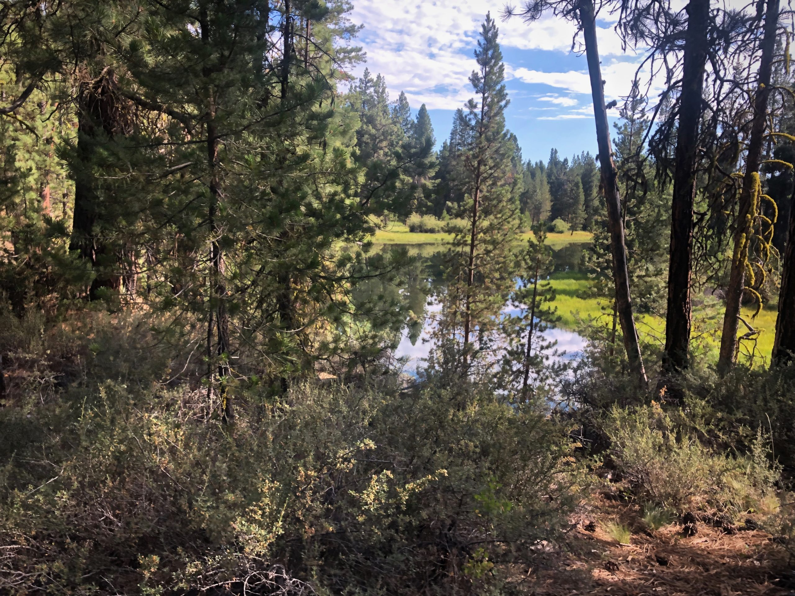 The Deschutes river at Dead Slough in LaPine State park near Bend, Oregon.