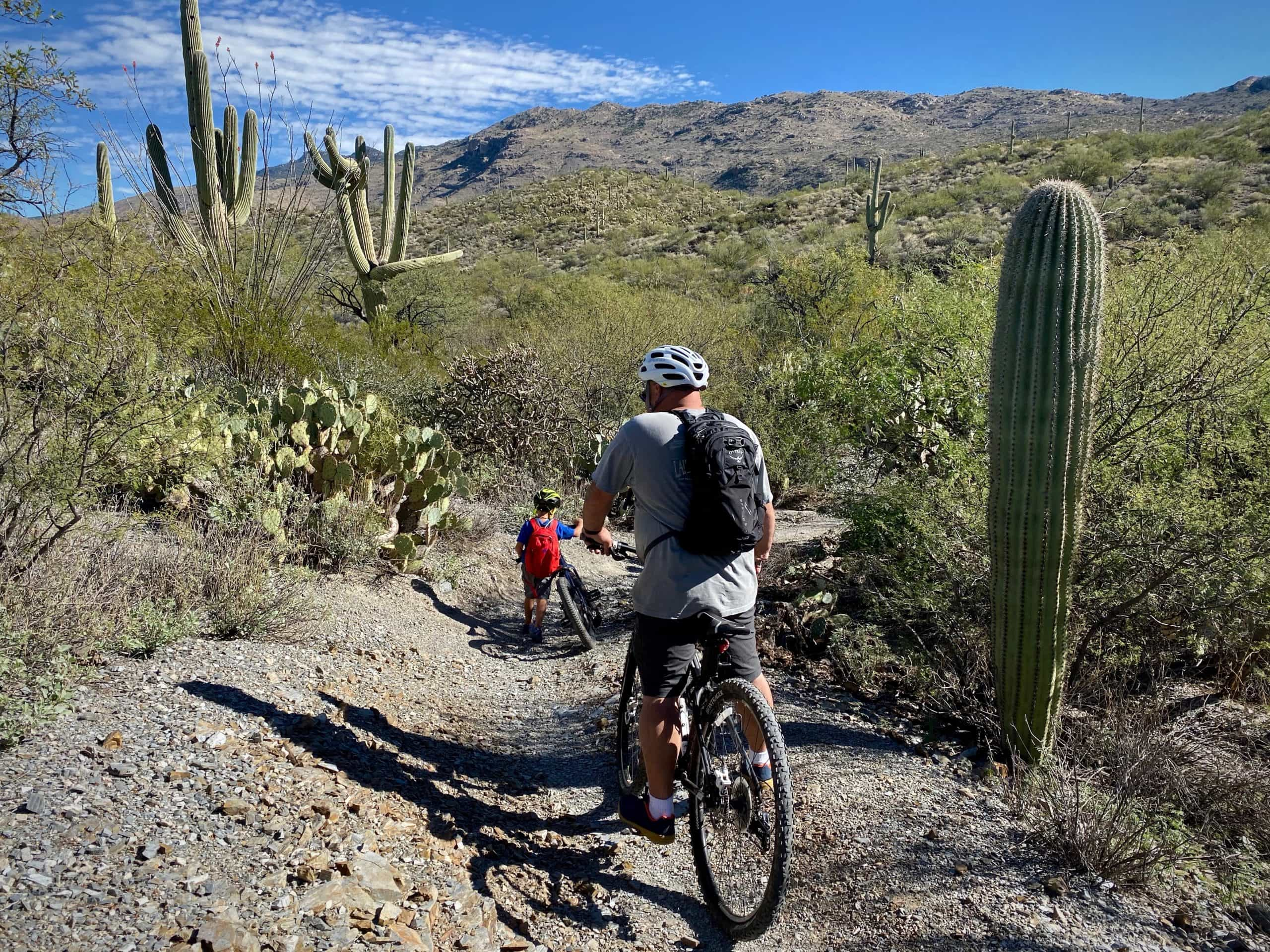 A family with young children riding mountain bikes on the Cactus Forest trail in Saguaro National Park (East) near Tucson, Arizona.