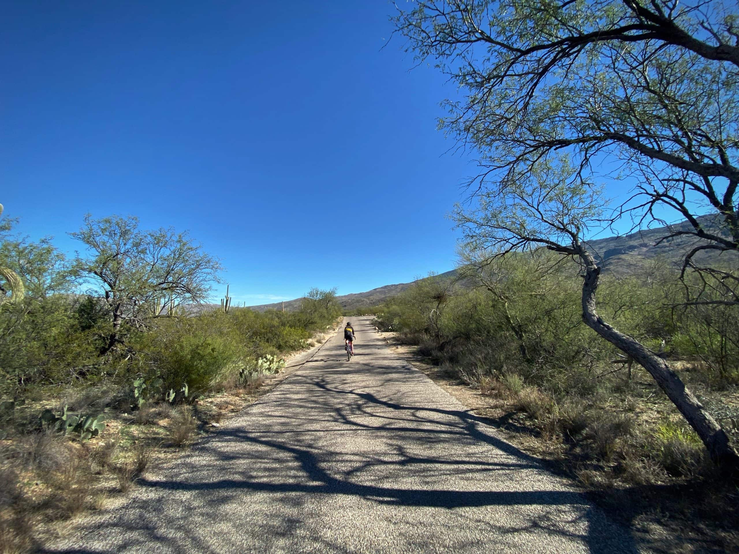 Cyclist on the Cactus Forest road (paved) in Saguaro National Park (east) in Tucson, Arizona.