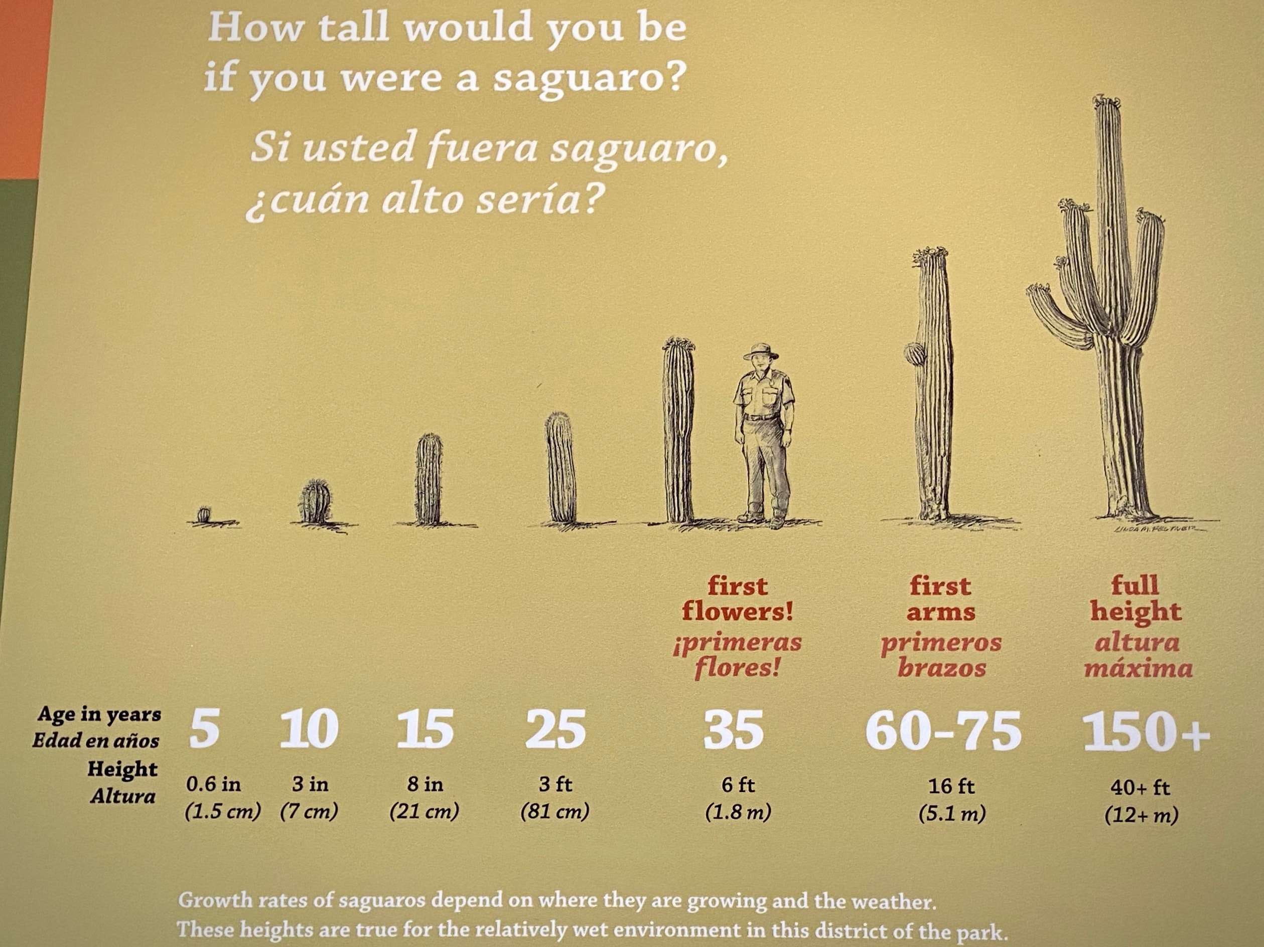 Plaque showing the growth rate of saguaro cactus.