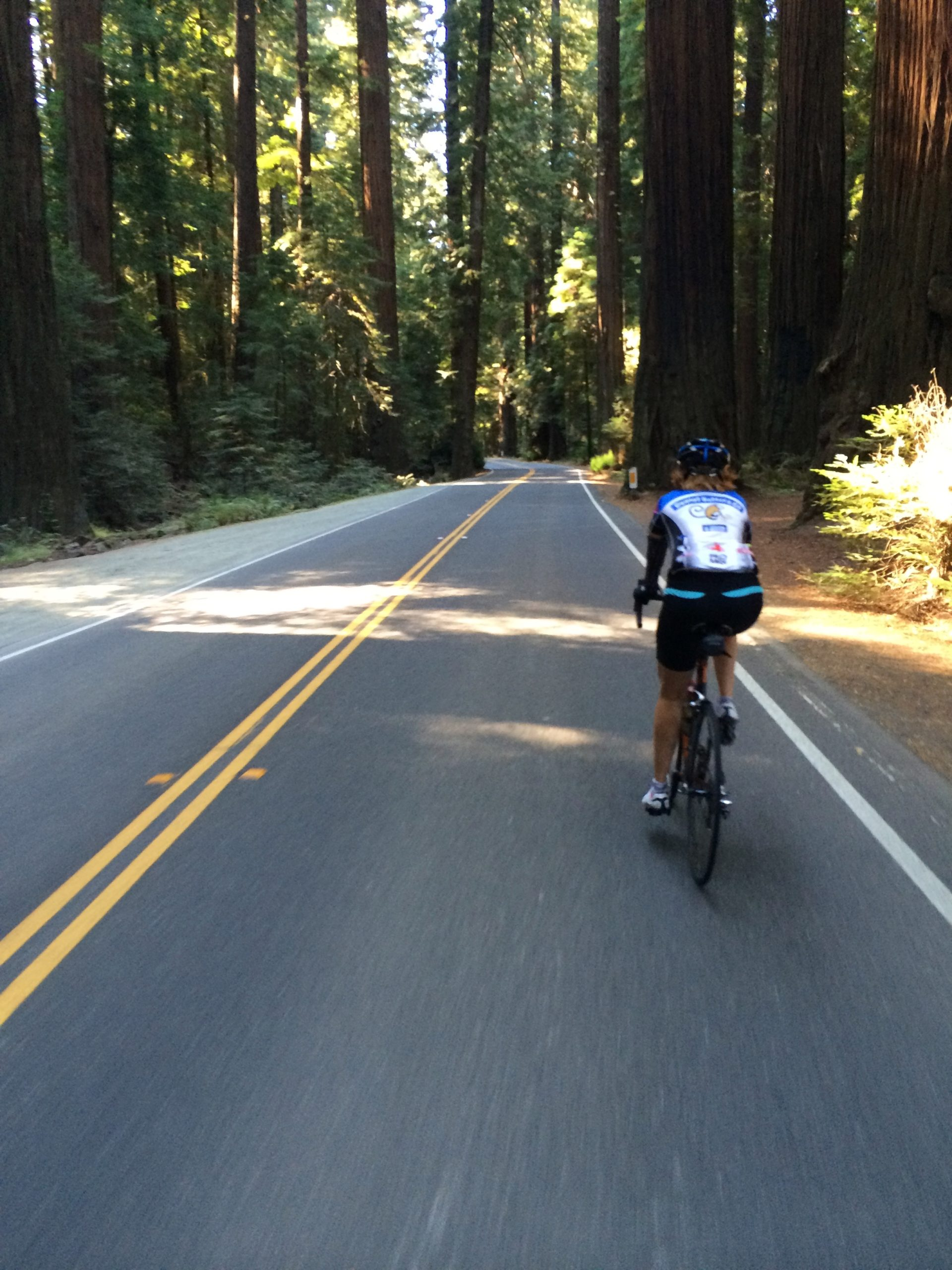 Woman cyclist riding the road Avenue of the Giants in Humboldt county, California.