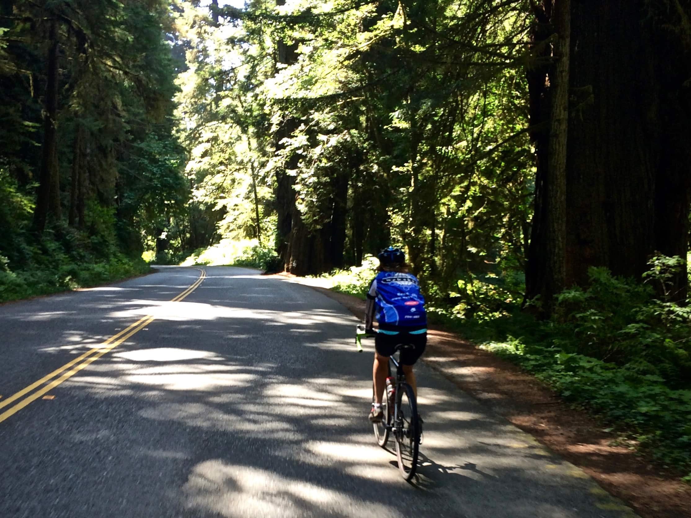 Woman cyclist on Drury Scenic parkway with big Redwoods lining both sides of the road.
