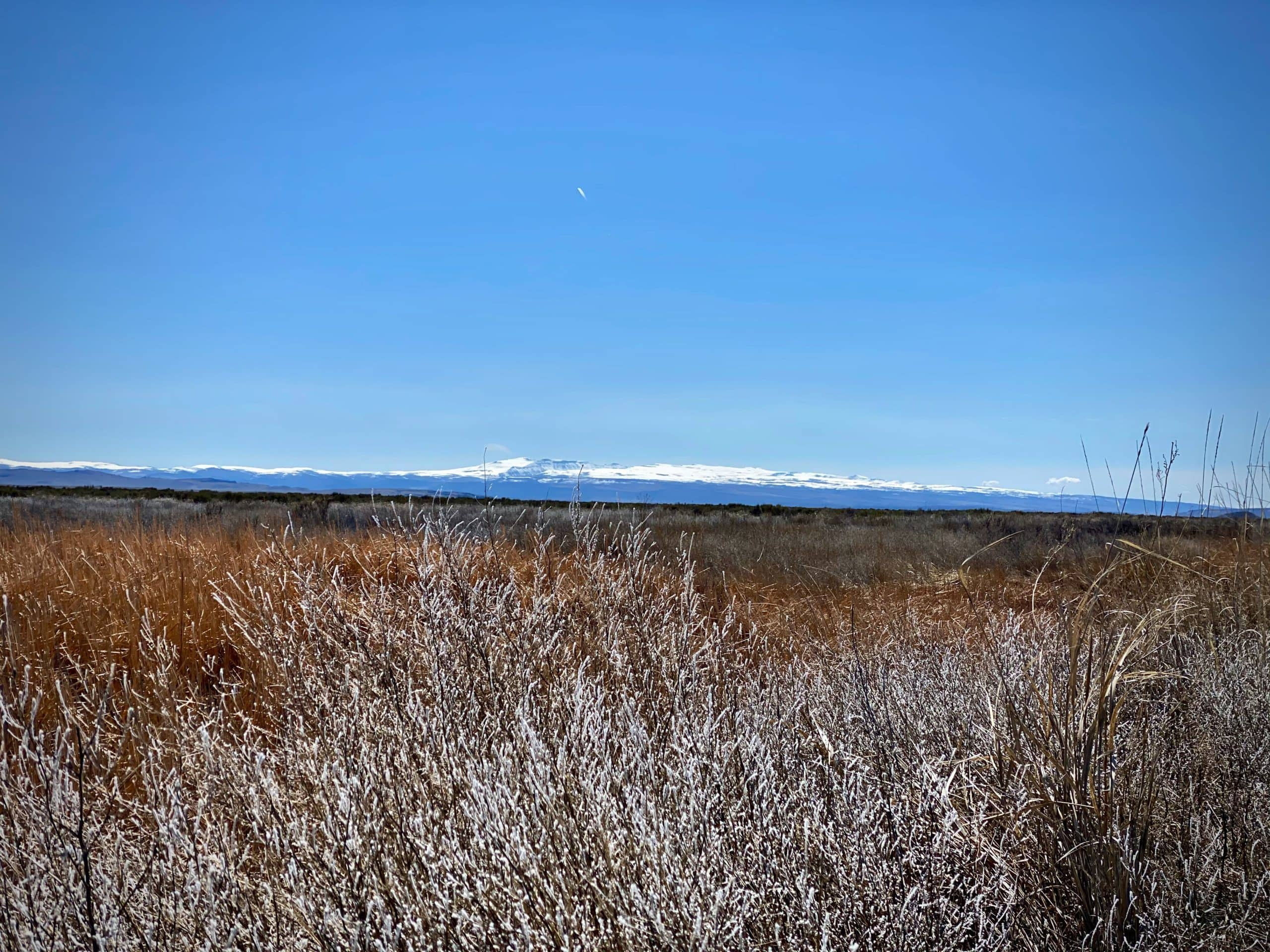 A view of Steens Mountain from Malheur National Wildlife refuge.