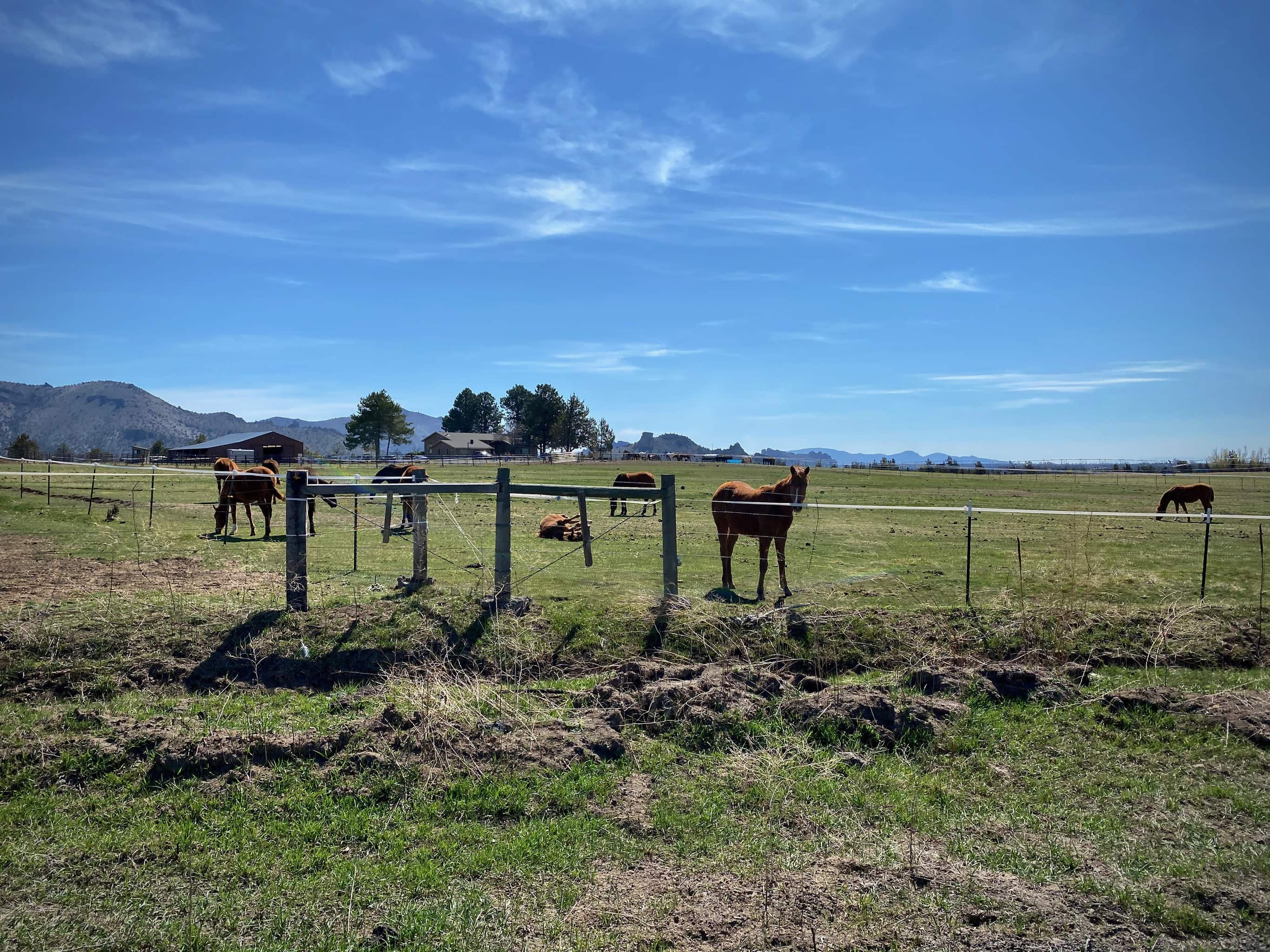 Horses along the the Culver highway between Madras and Terrebonne, Oregon.