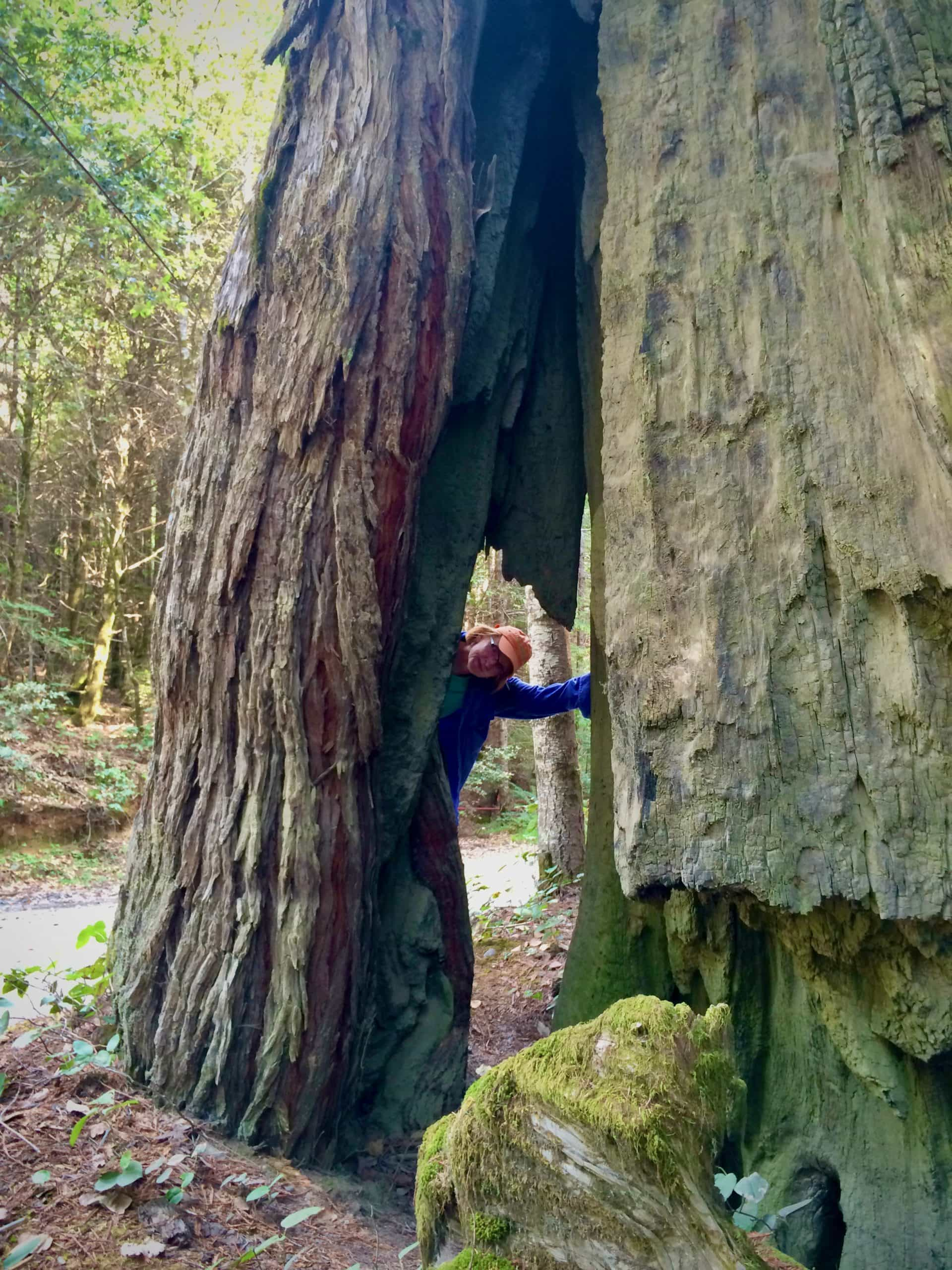 Gravel Girl standing next to big redwood tree in Redwood National park in Northern California.