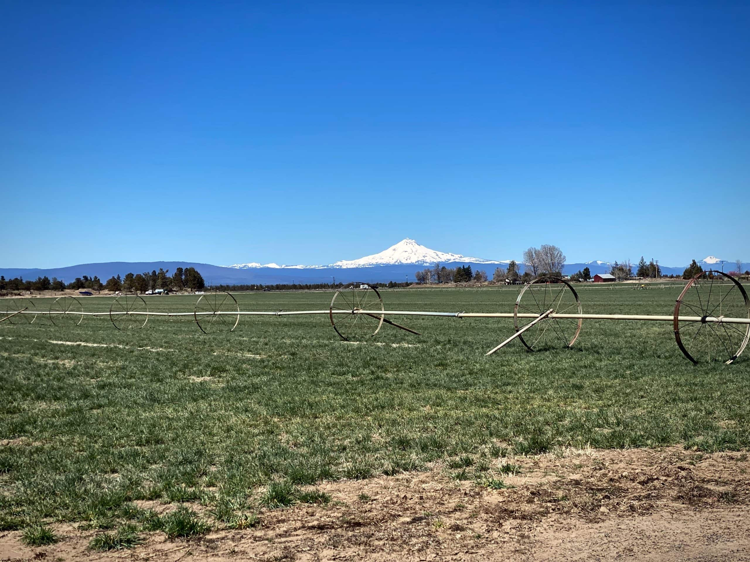 View of Mt Jefferson from the Culver highway near Terrebonne, Oregon.