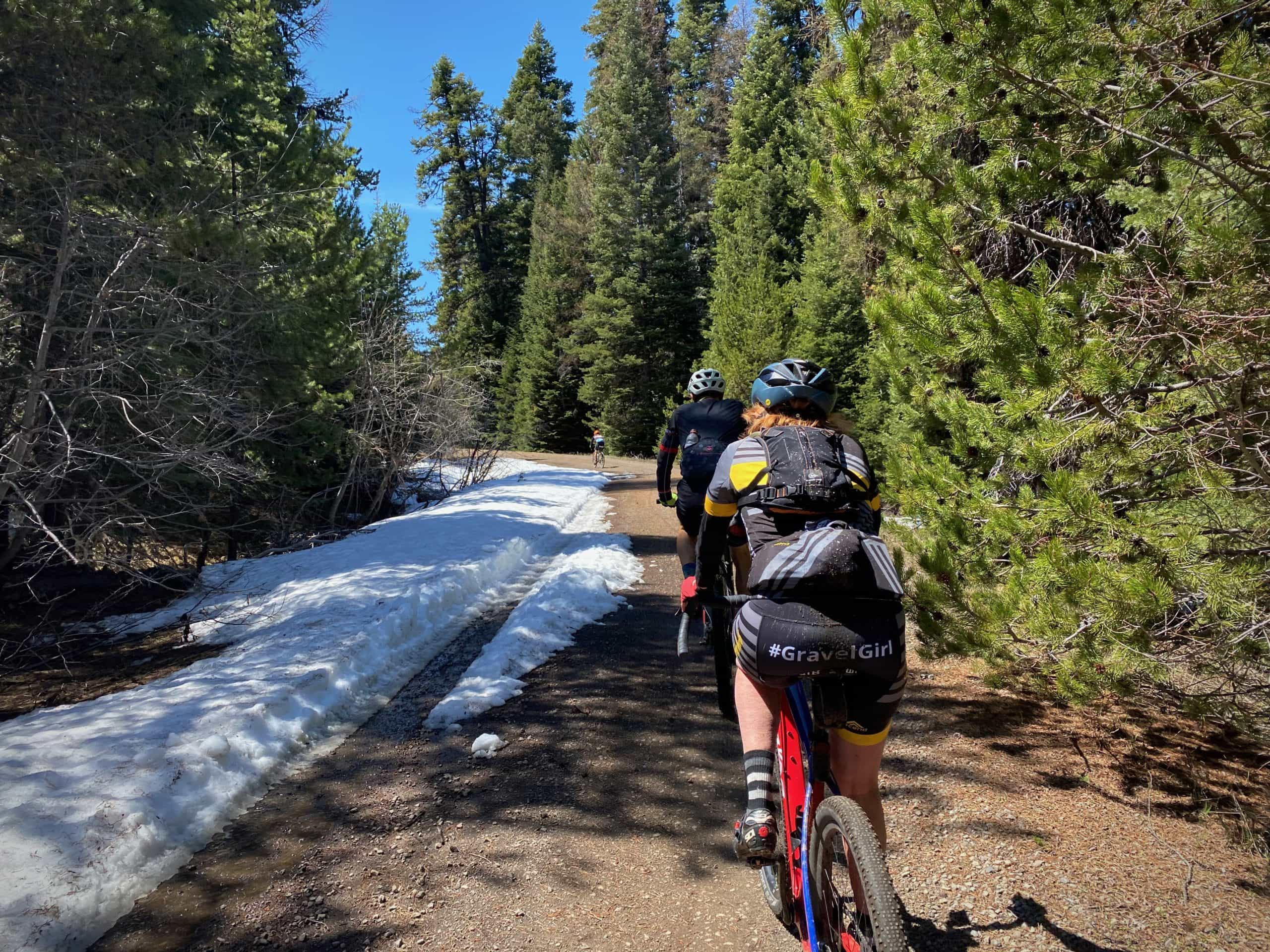 Gravel cyclists on forest service road in Ponderosa trees in Central Oregon.