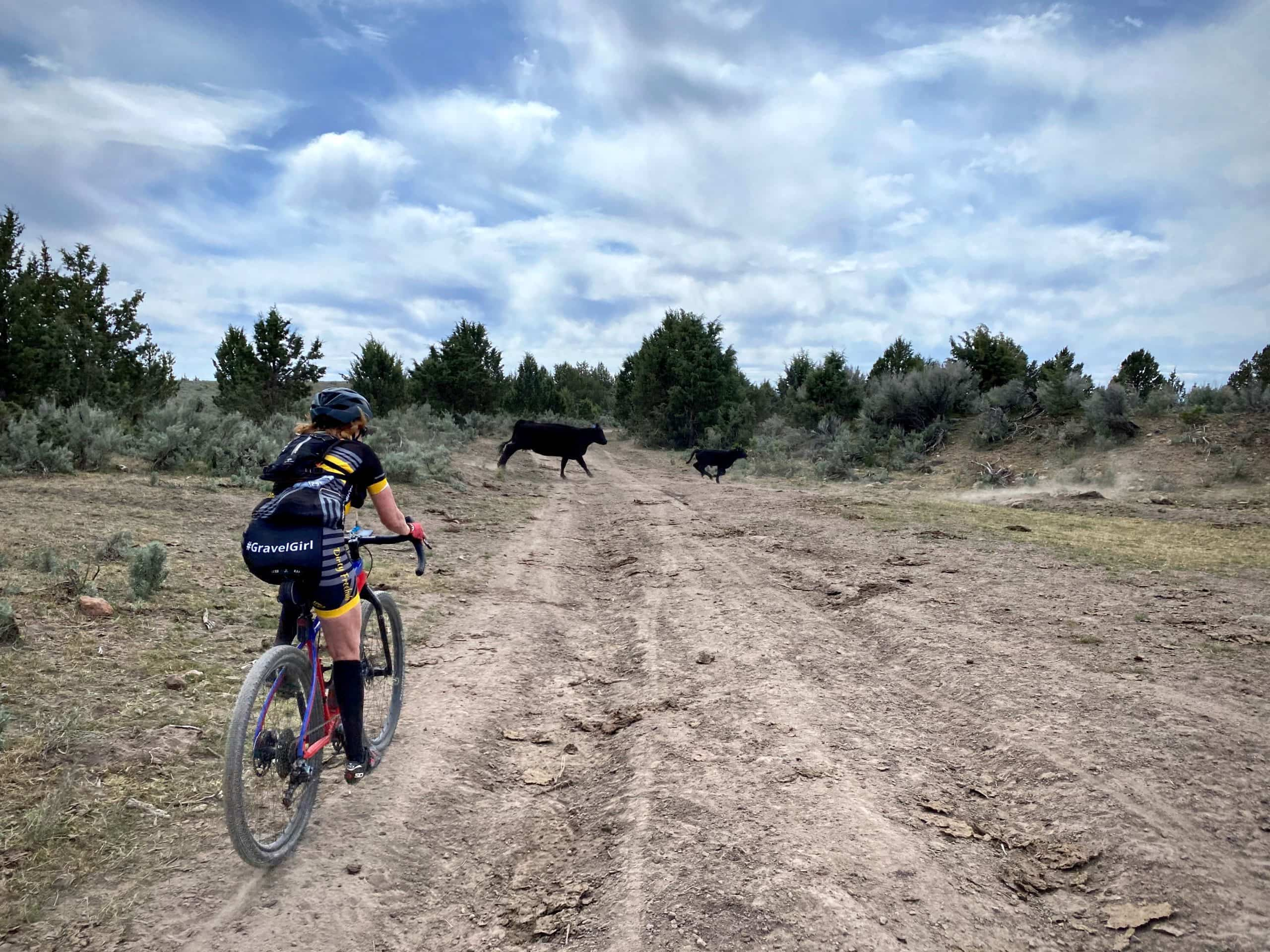 Gravel Girl riding dirt road with cows crossing in front of her.
