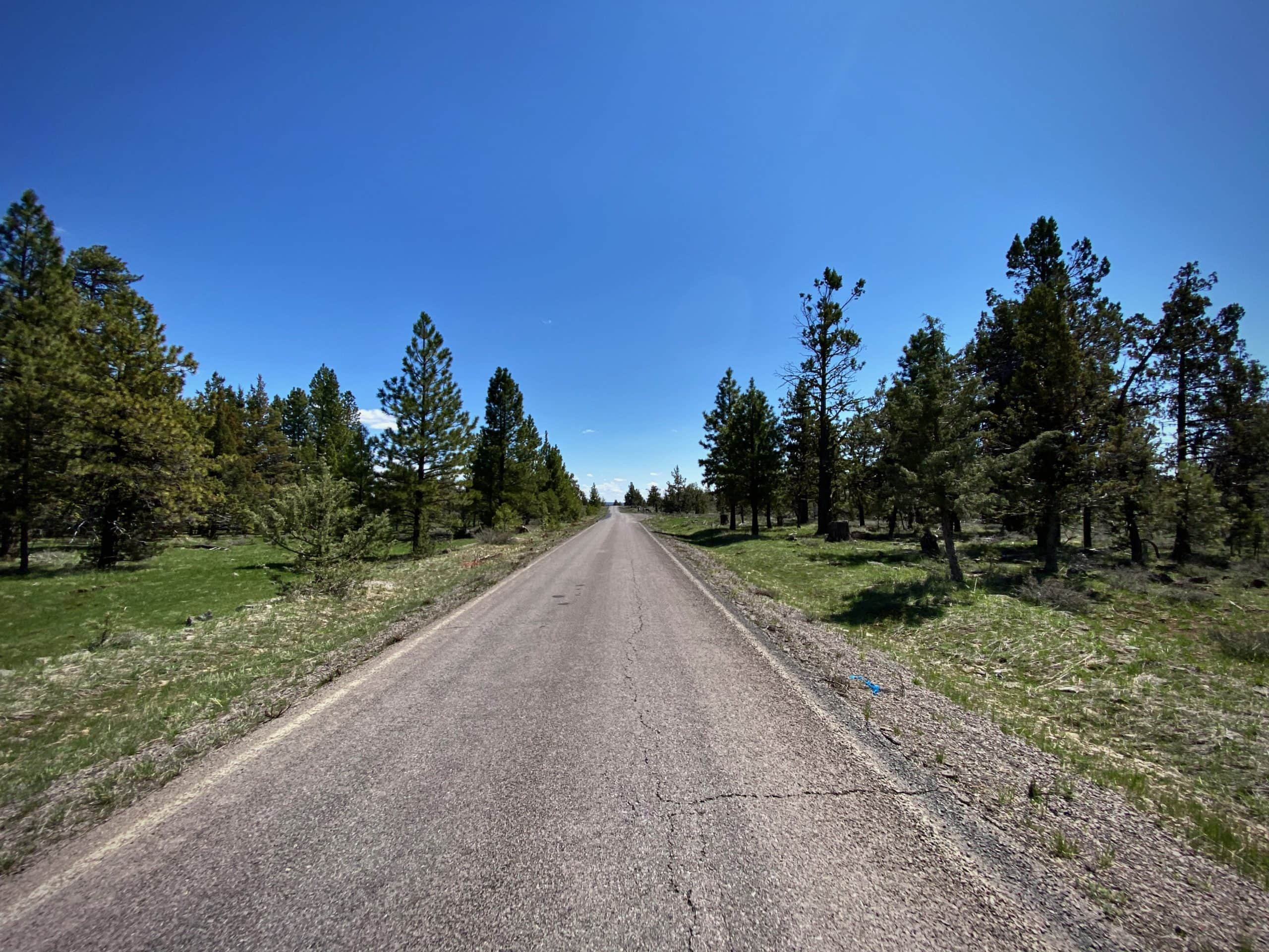 A long, straight section of NF-41 in the Malheur National forest.