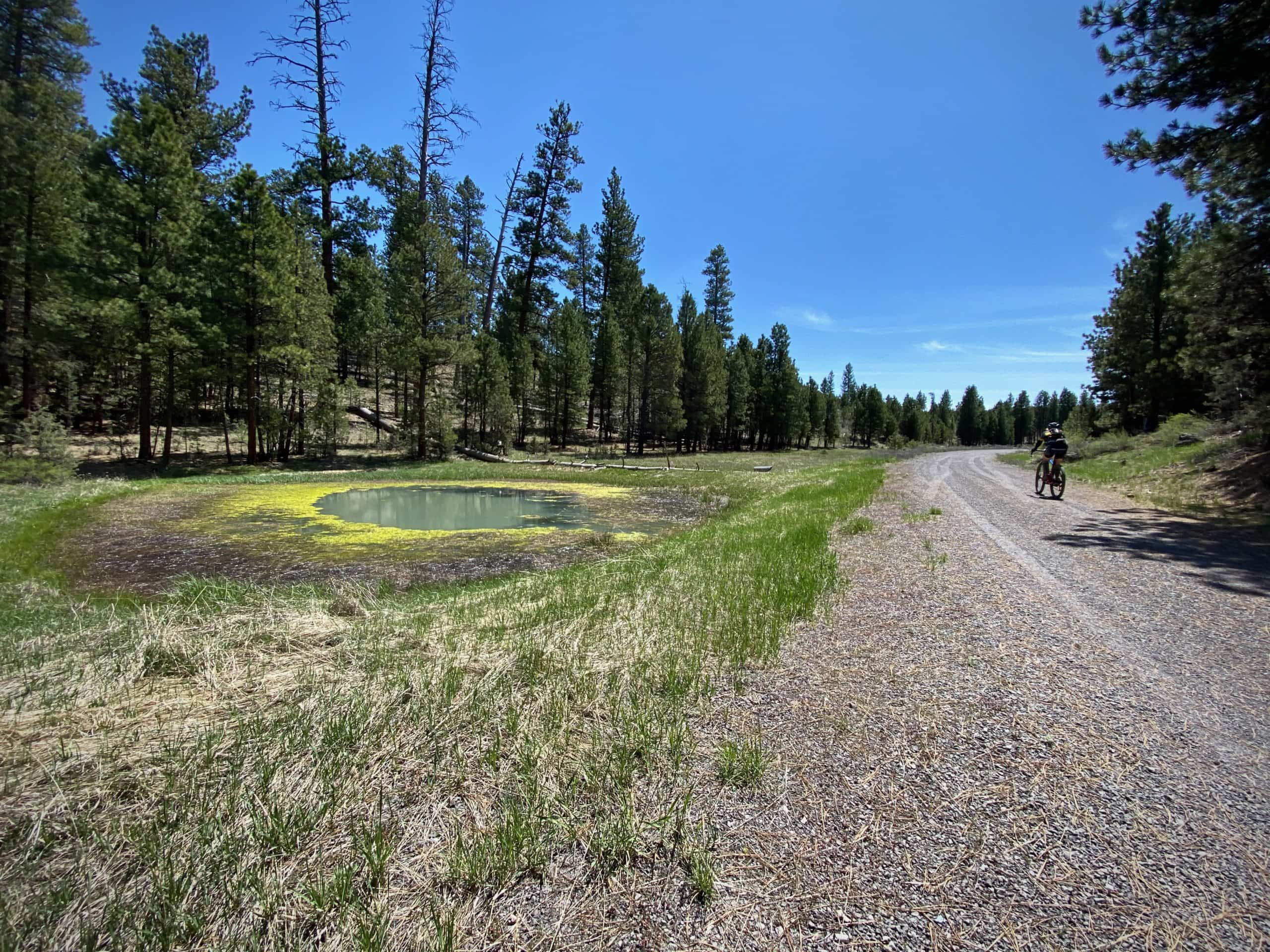 Gravel Girl riding past small man made reservoir in the Ochoco National Forest.