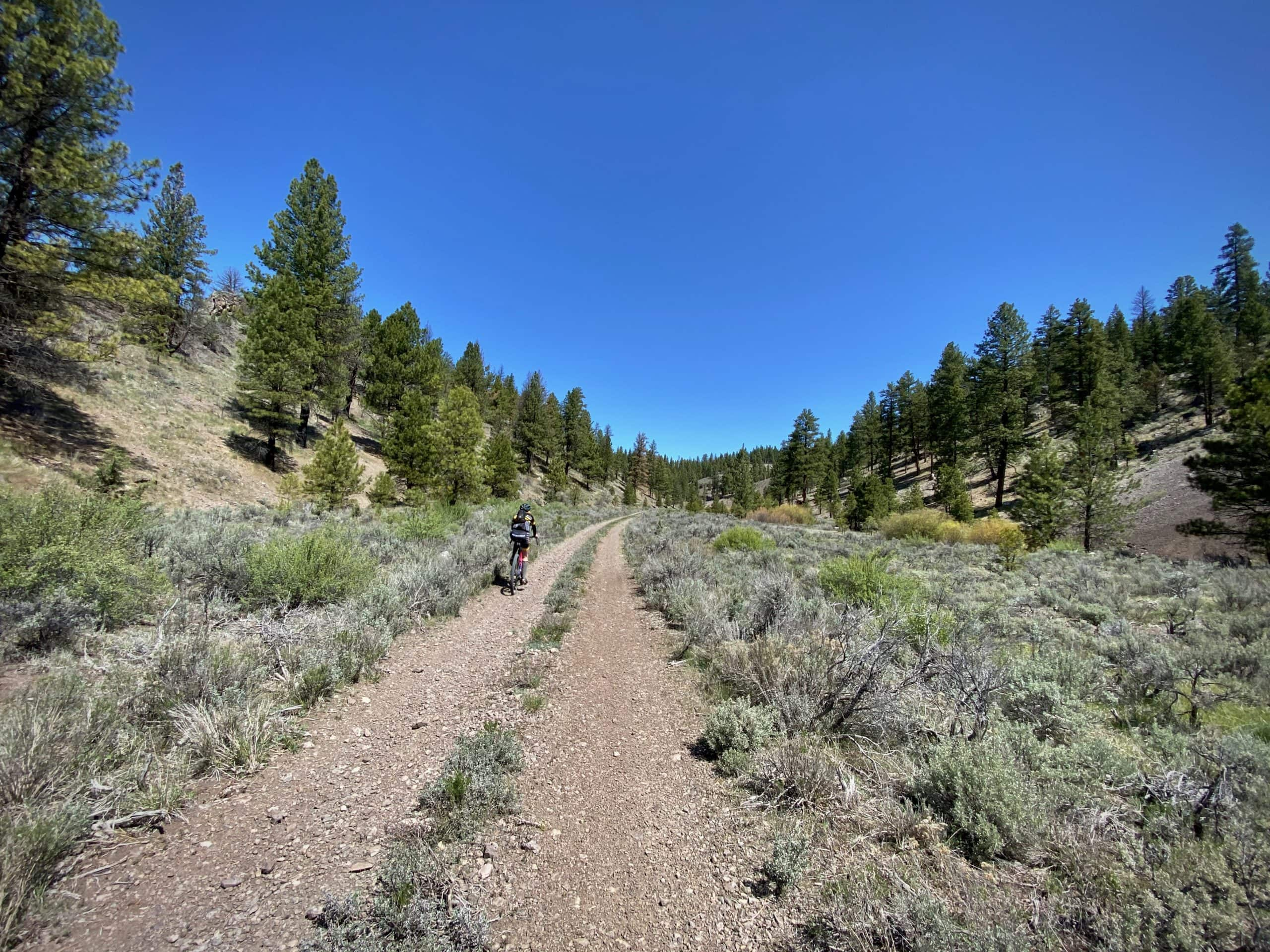 Gravel Girl on primitive forest service road in the Ochoco National Forest in Harney county.