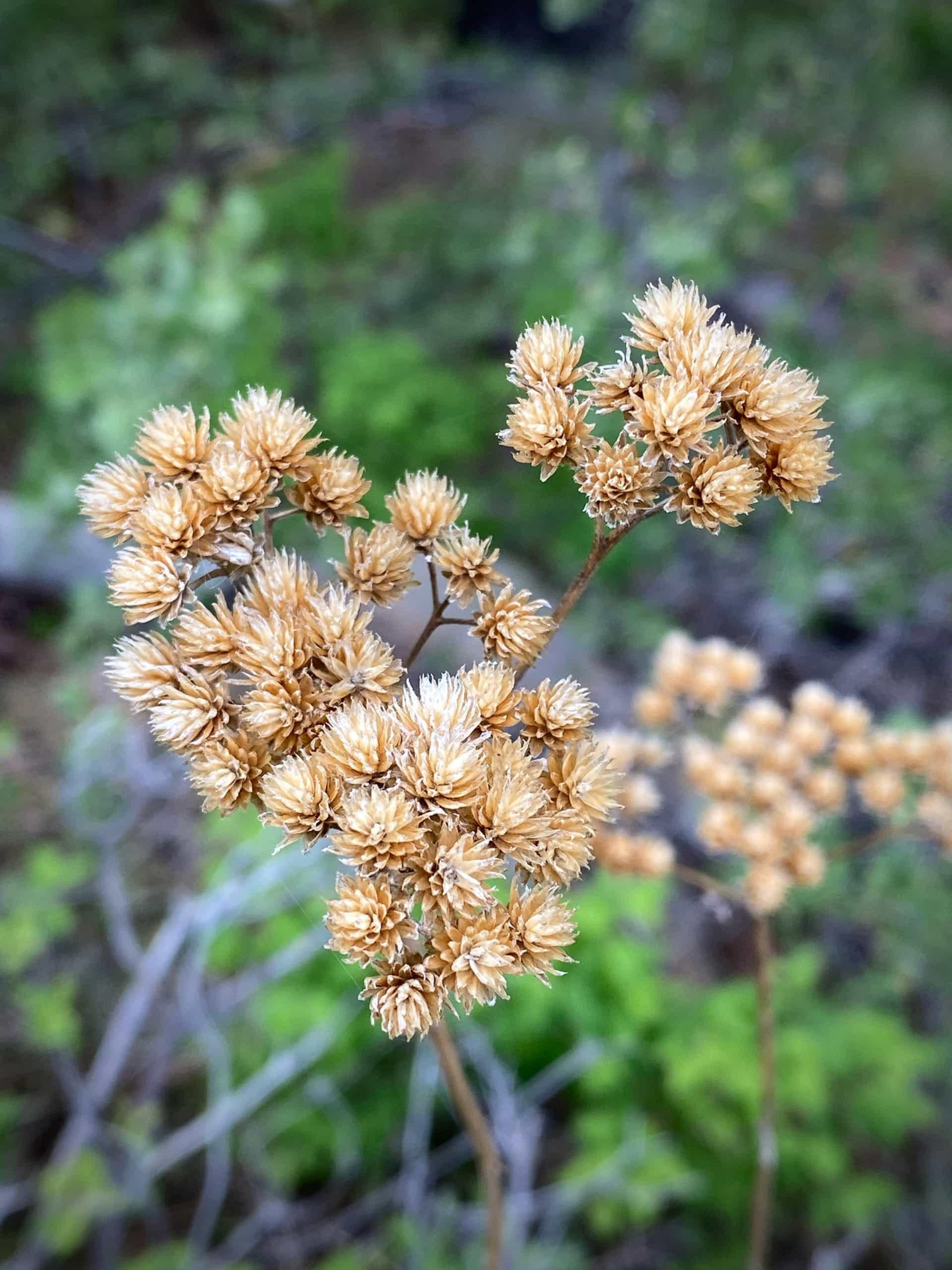 Flowers found in the Ochoco National forest near Paulina, OR.