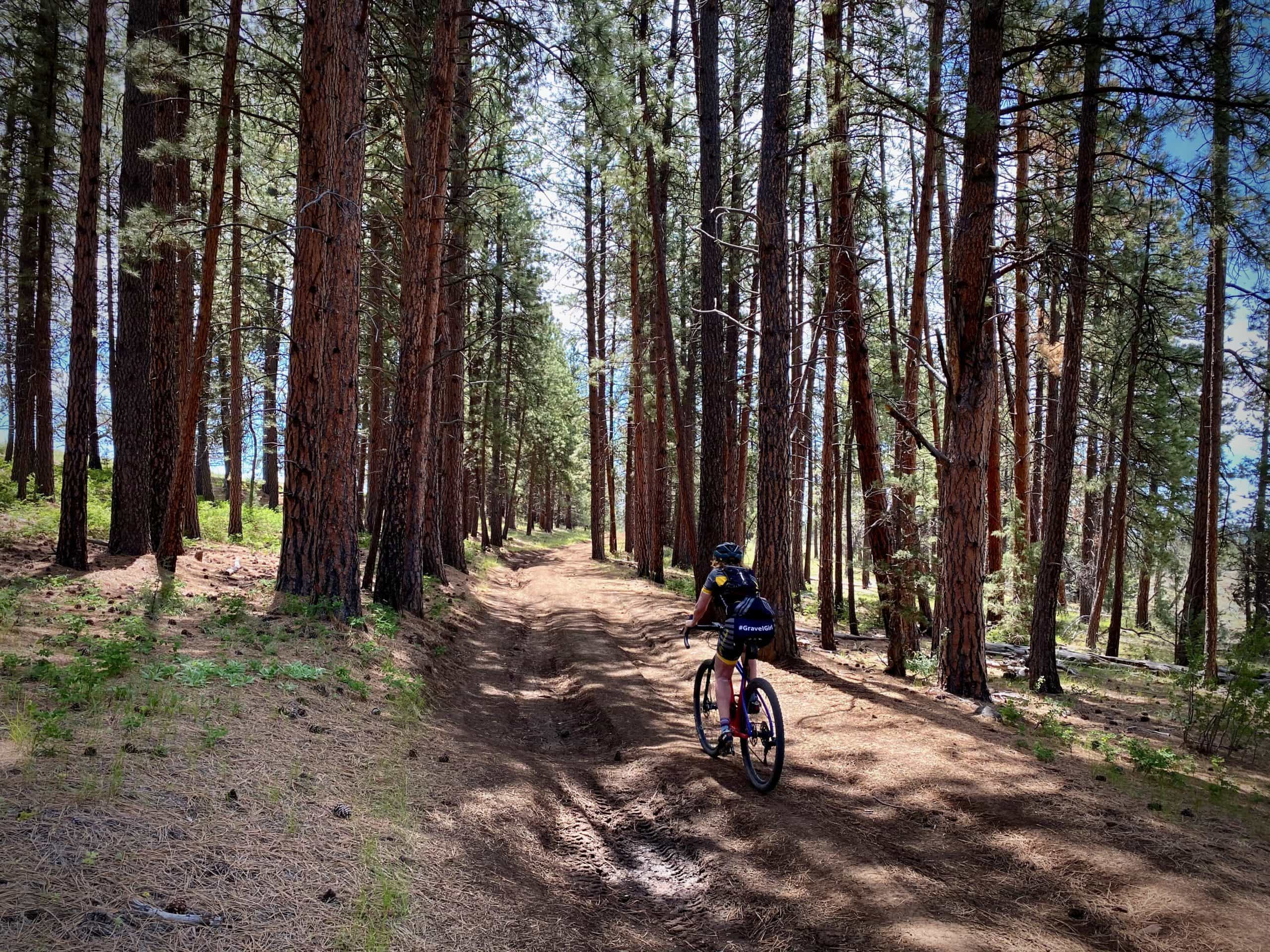 Cyclist riding amongst tall Ponderosa trees and loamy soil in Central Oregon.