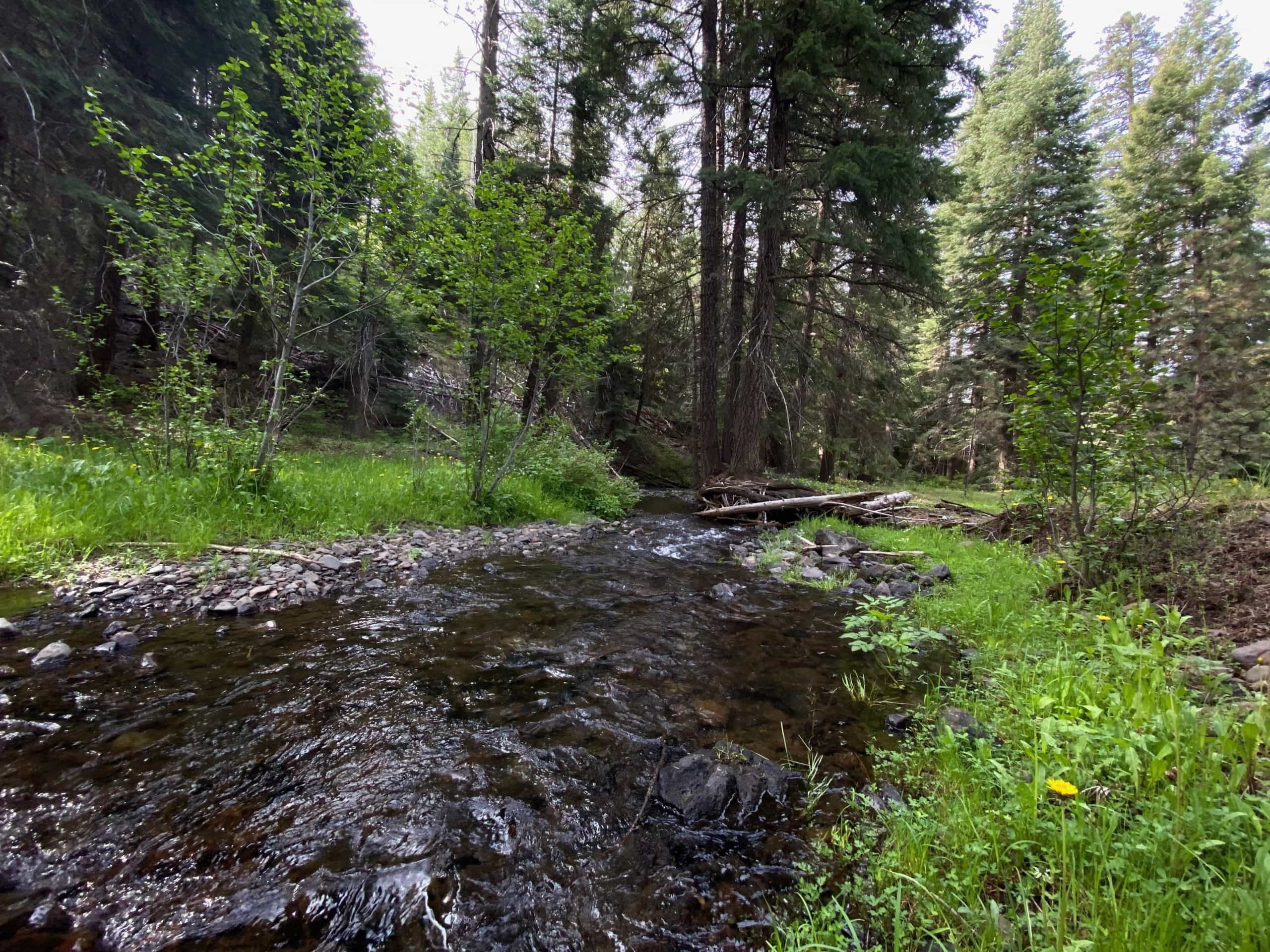 Wolf creek in the Ochoco National forest near Prineville, OR.