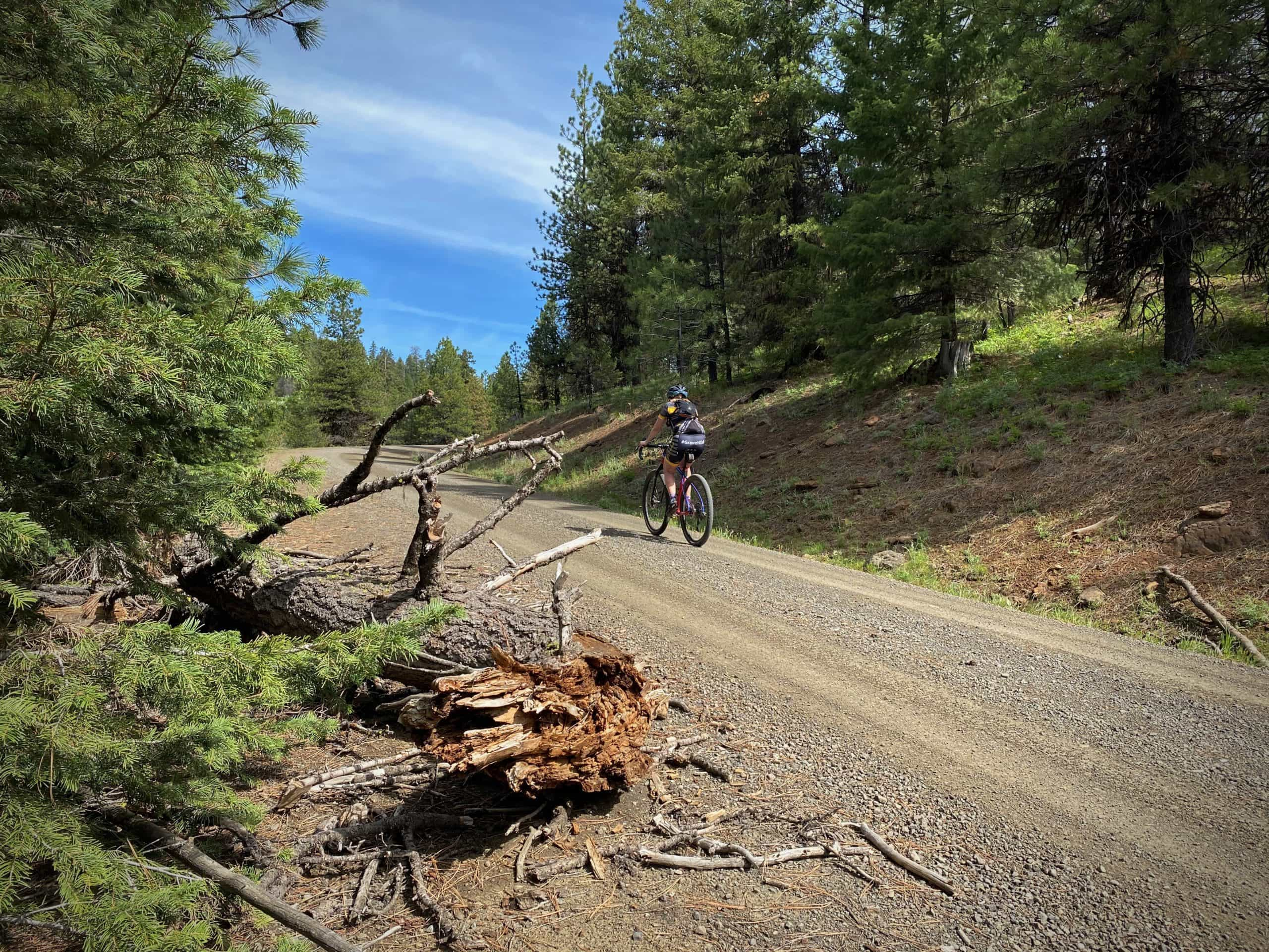 Gravel cyclist on unpaved forest service road in the Ochoco mountains in Central Oregon.
