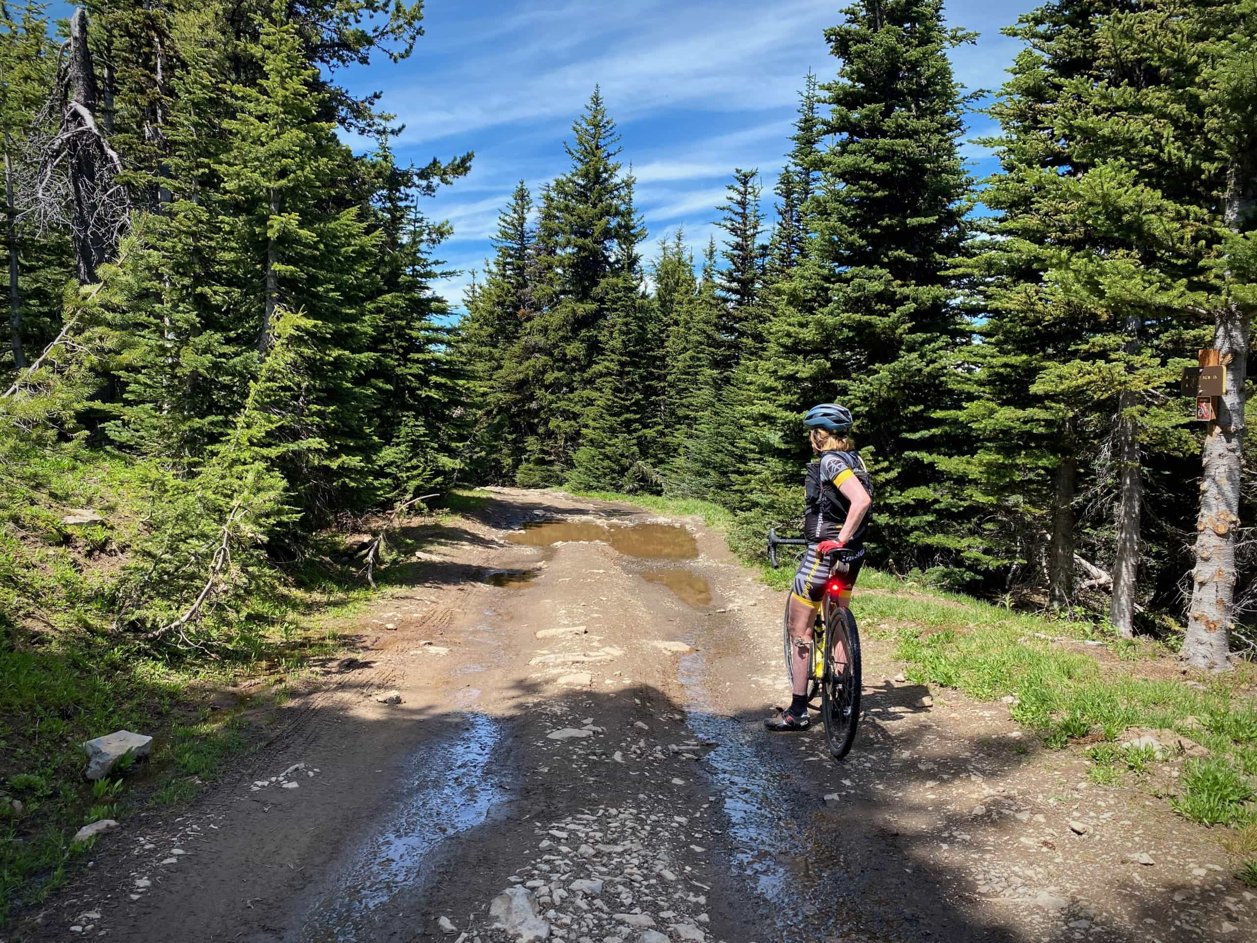 Bennett Pass road at High Prairie with mud puddles. Mt Hood National forest.