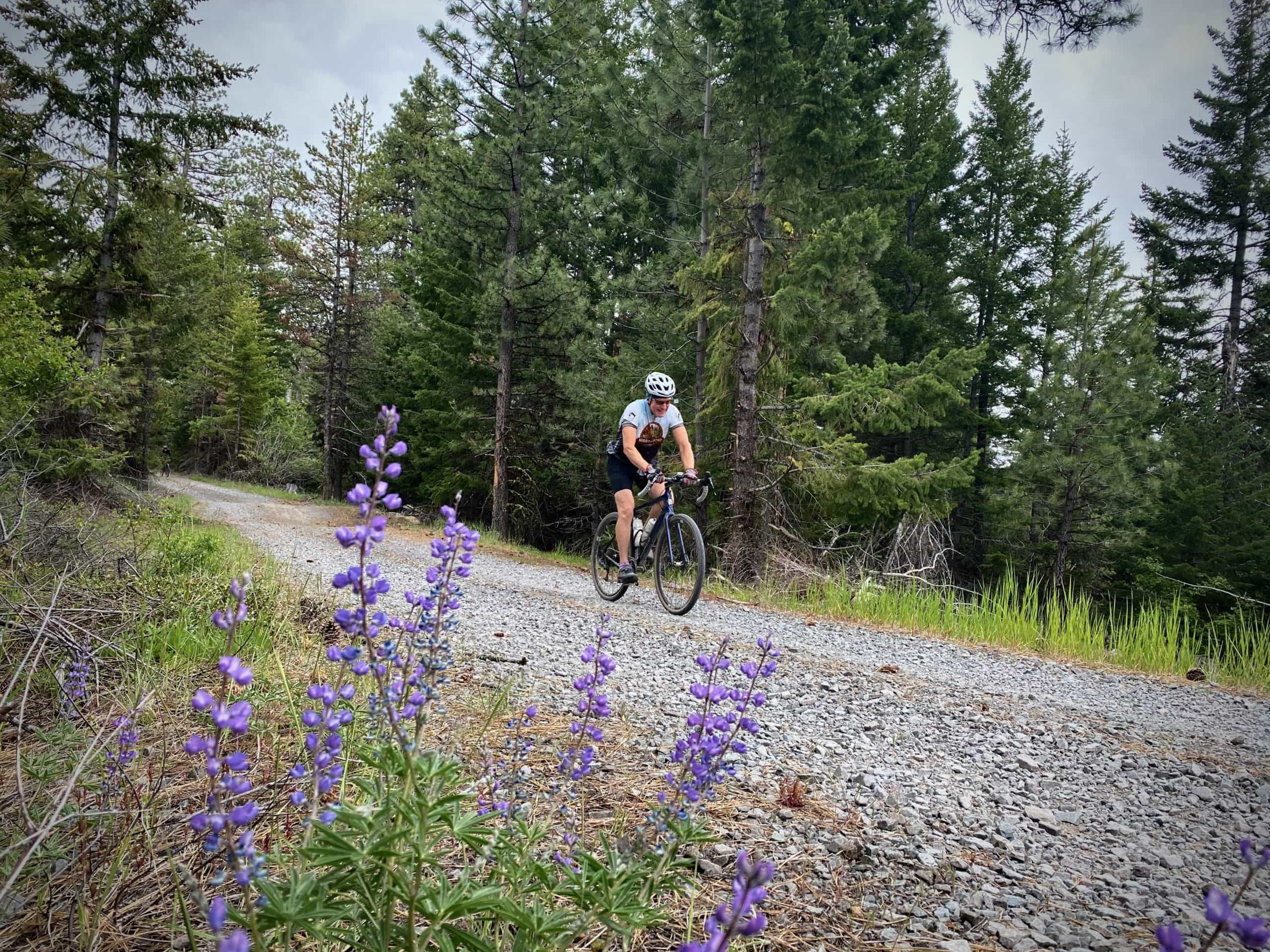 Cyclist on gray gravel road with purple flowers in foreground in Mt Hood National Forest.