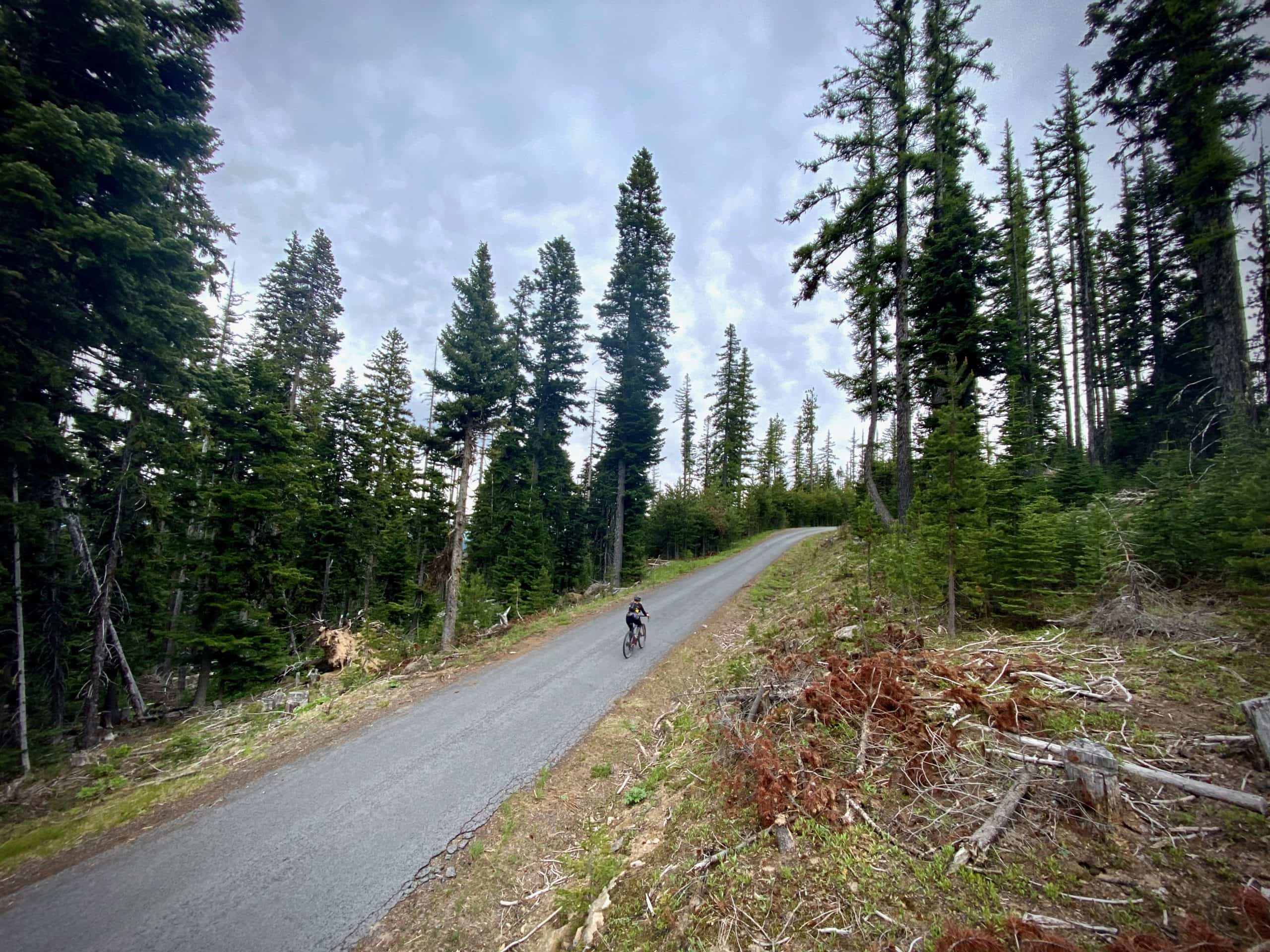 Woman cyclist on Cold Spring road approaching summit of climb near Beaver Creek Wilderness.