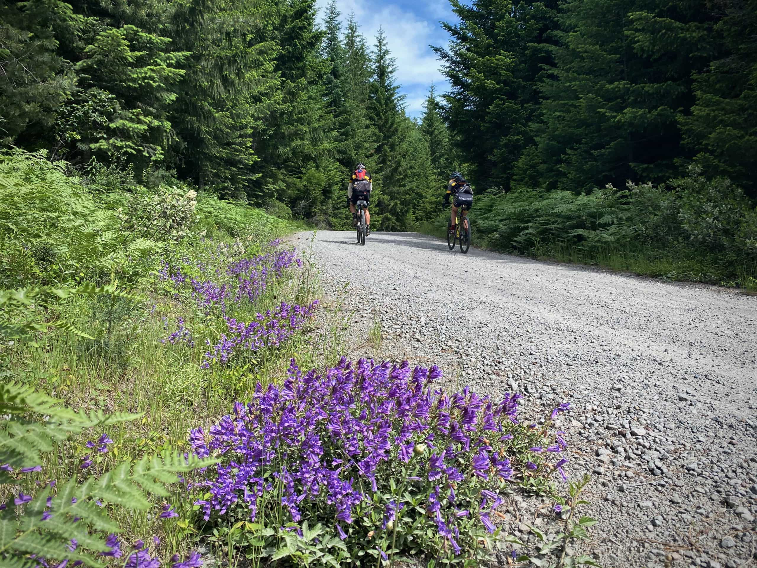Purple flowers with gravel bike riders in the distance. Oregon.