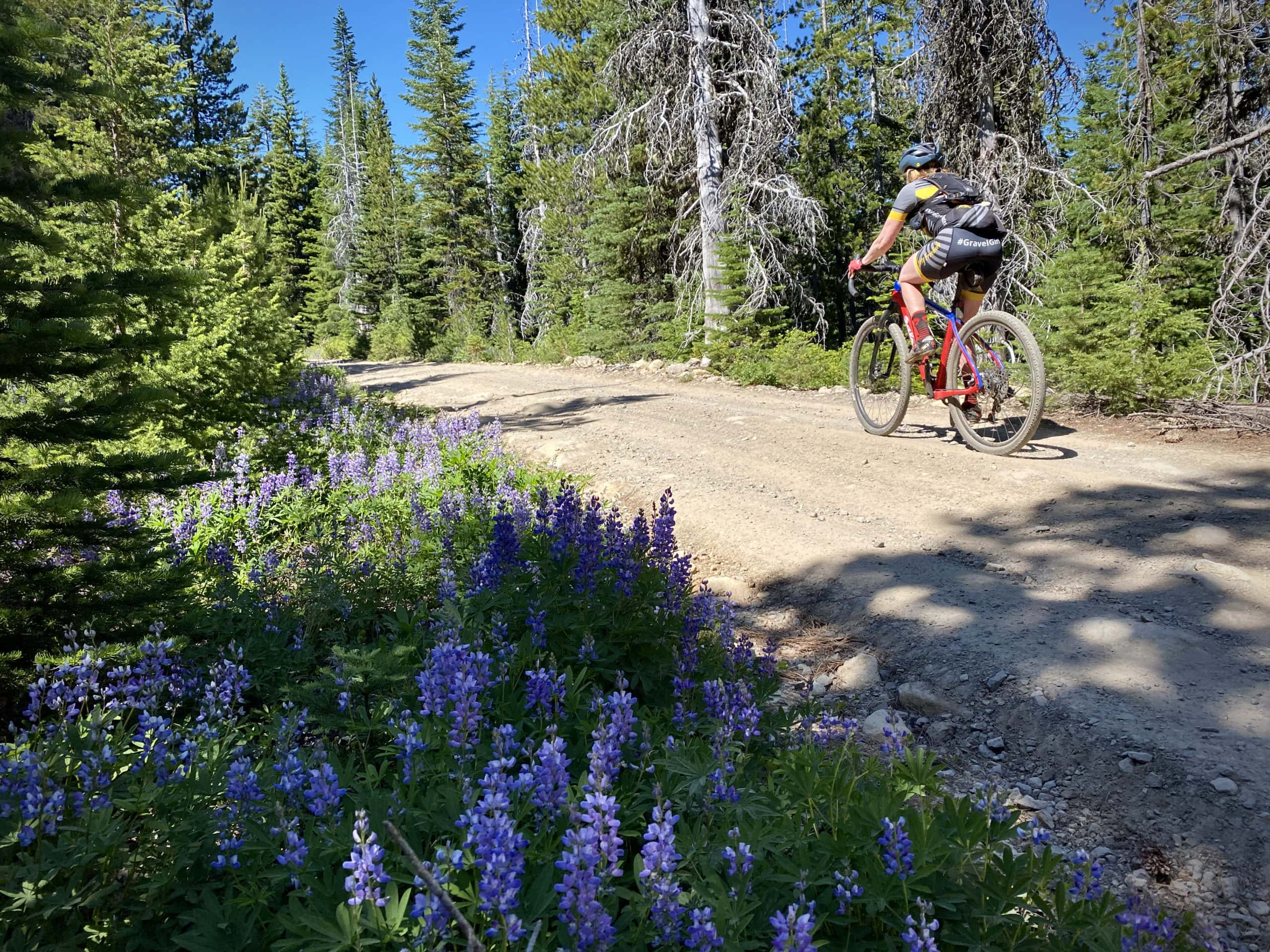 Bike rider on the gravel portion of NF 4880 near Bonney Meadows in the the Mt Hood National Forest.