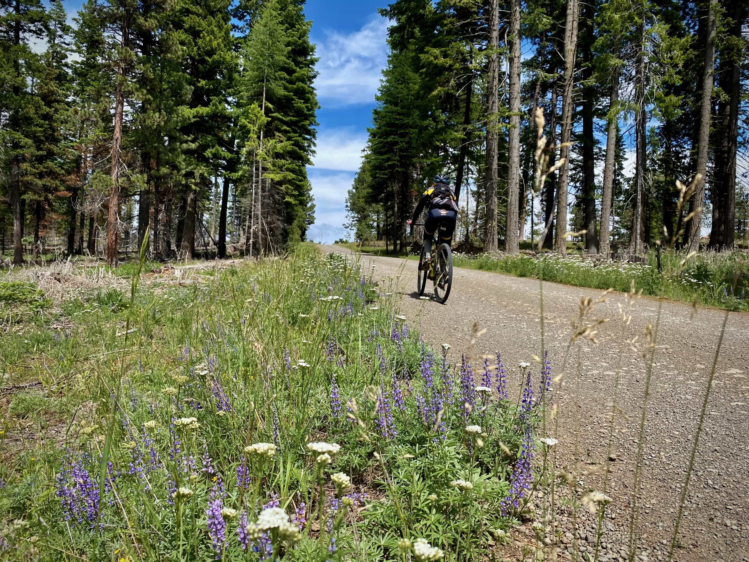 Gravel cyclist on a small climb with purple flowers in foreground in the Ochoco Mountains.