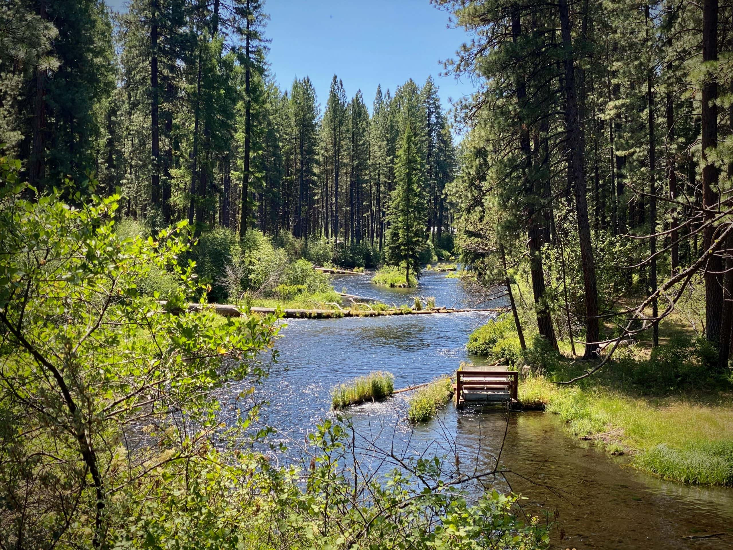 A view of the Metolius River just north of Camp Sherman, OR.