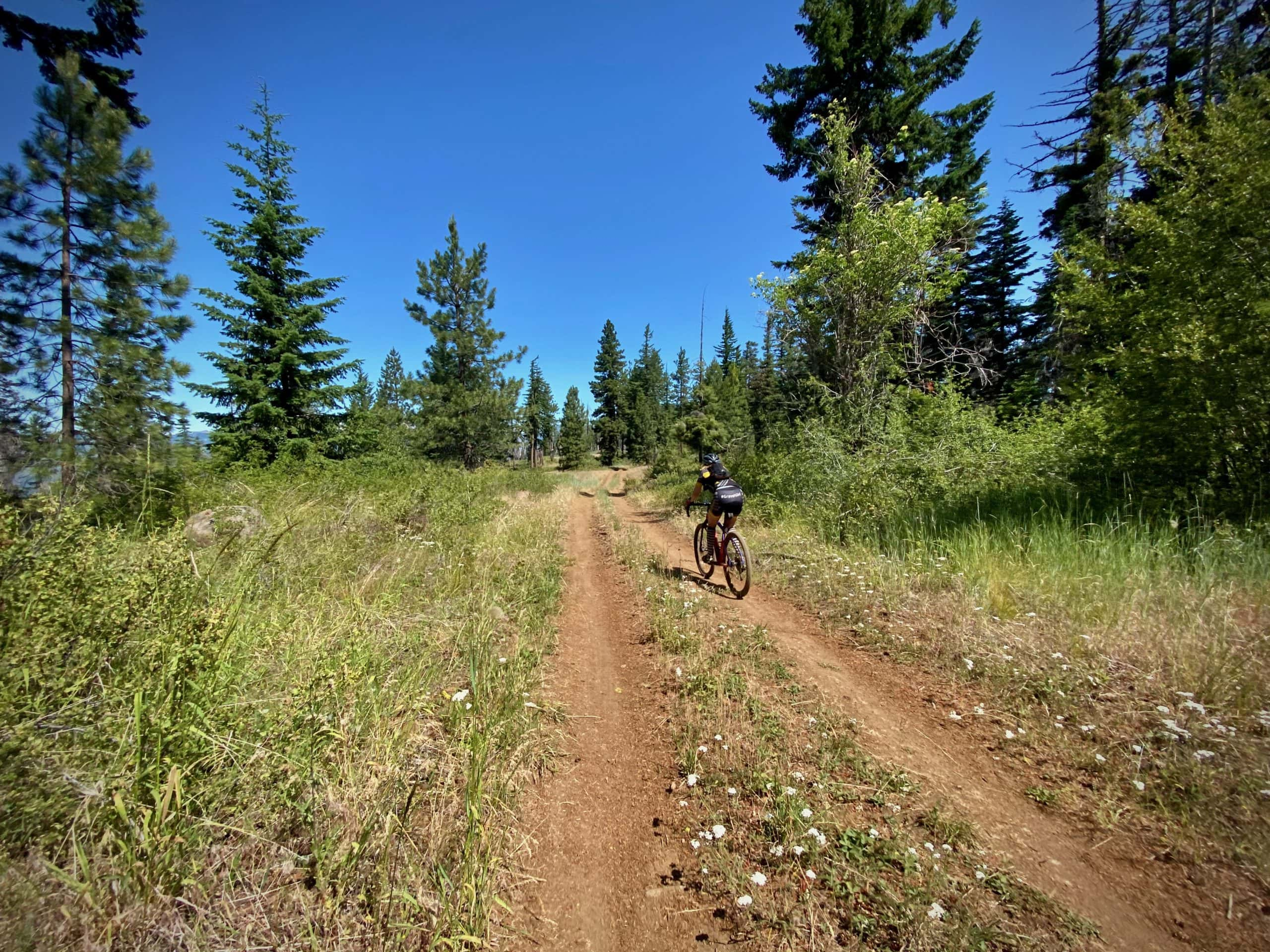 The double-track portion of the Green Ridge trail near Camp Sherman, Oregon.