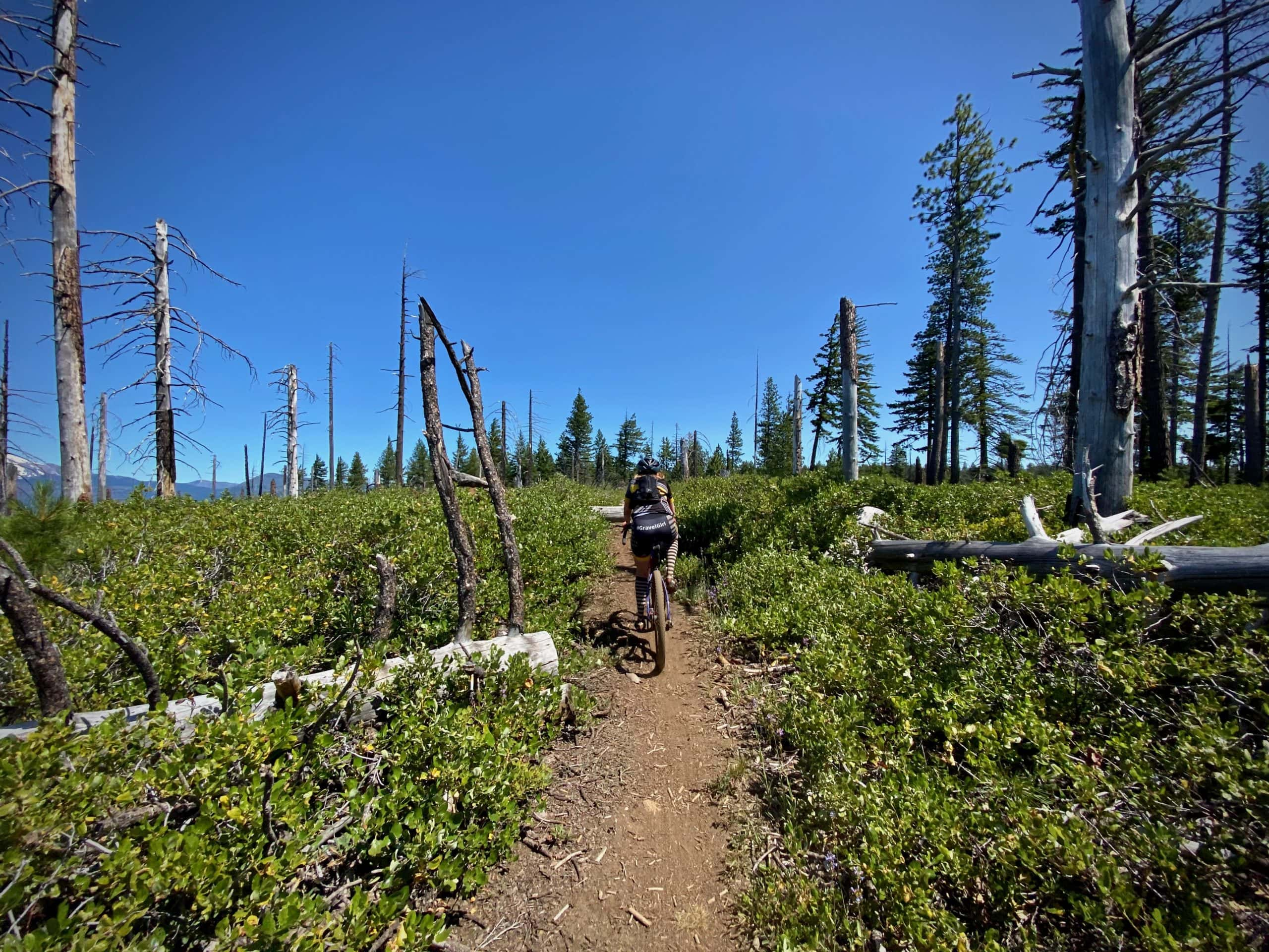 Cyclists on the Green Ridge trail in the section that burned in the Wizard fire of 2008 in Oregon.